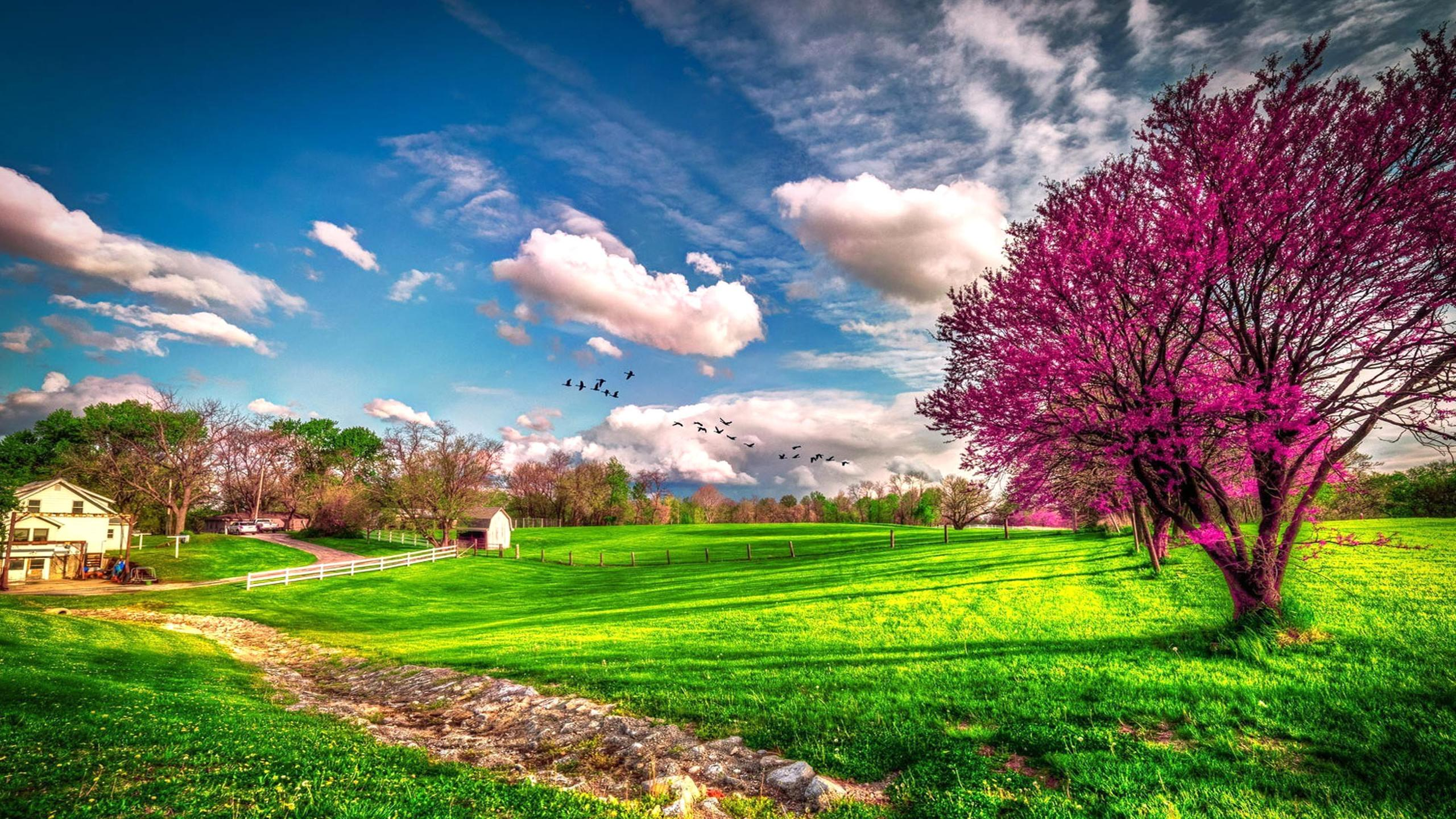 Wonderful Nature Hd Wallpaper: Landscape Beautiful Spring Nature