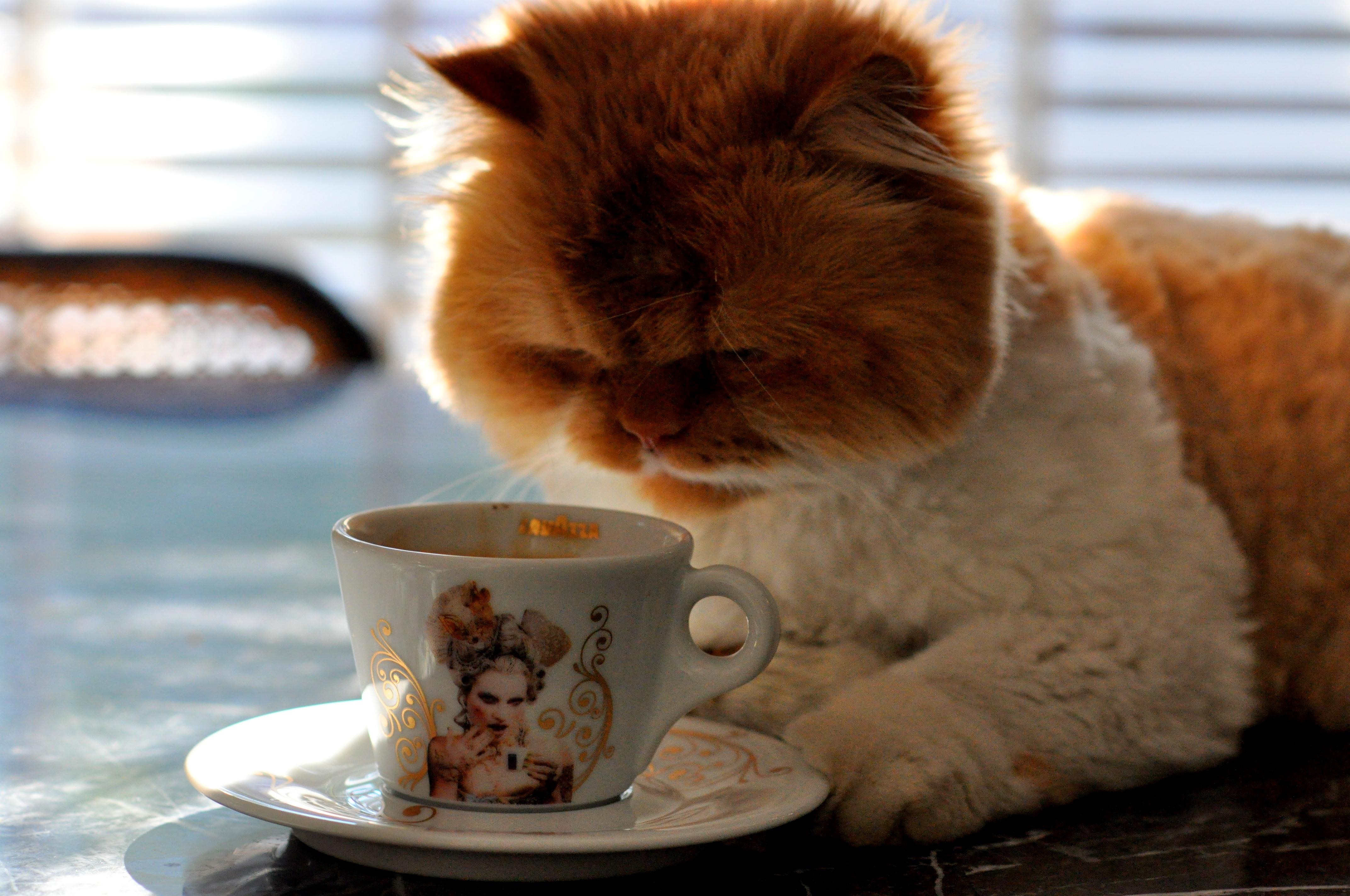 Coffee Cats Cafe Menu