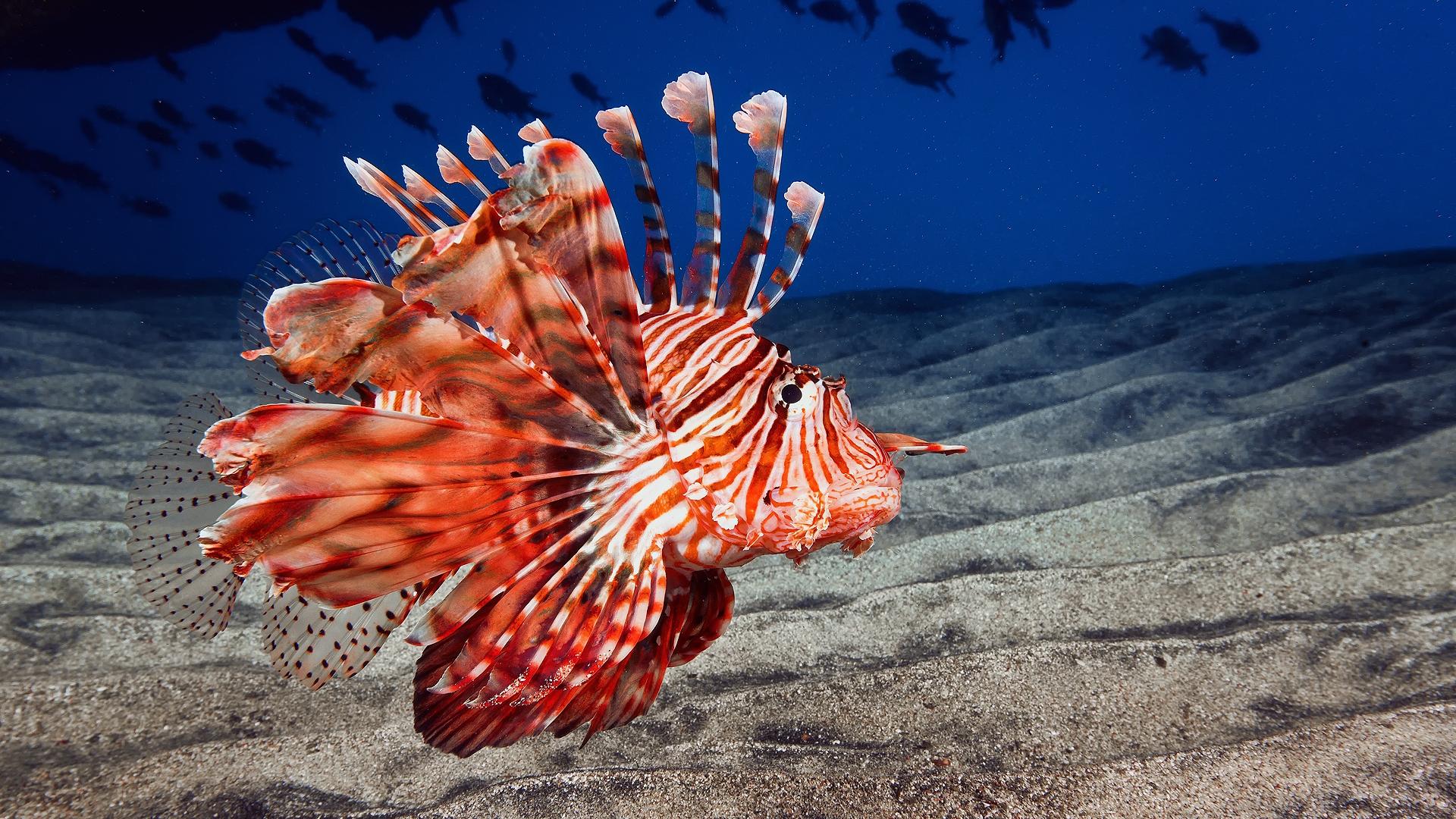Orange Fantastic Fish In The Ocean Waters