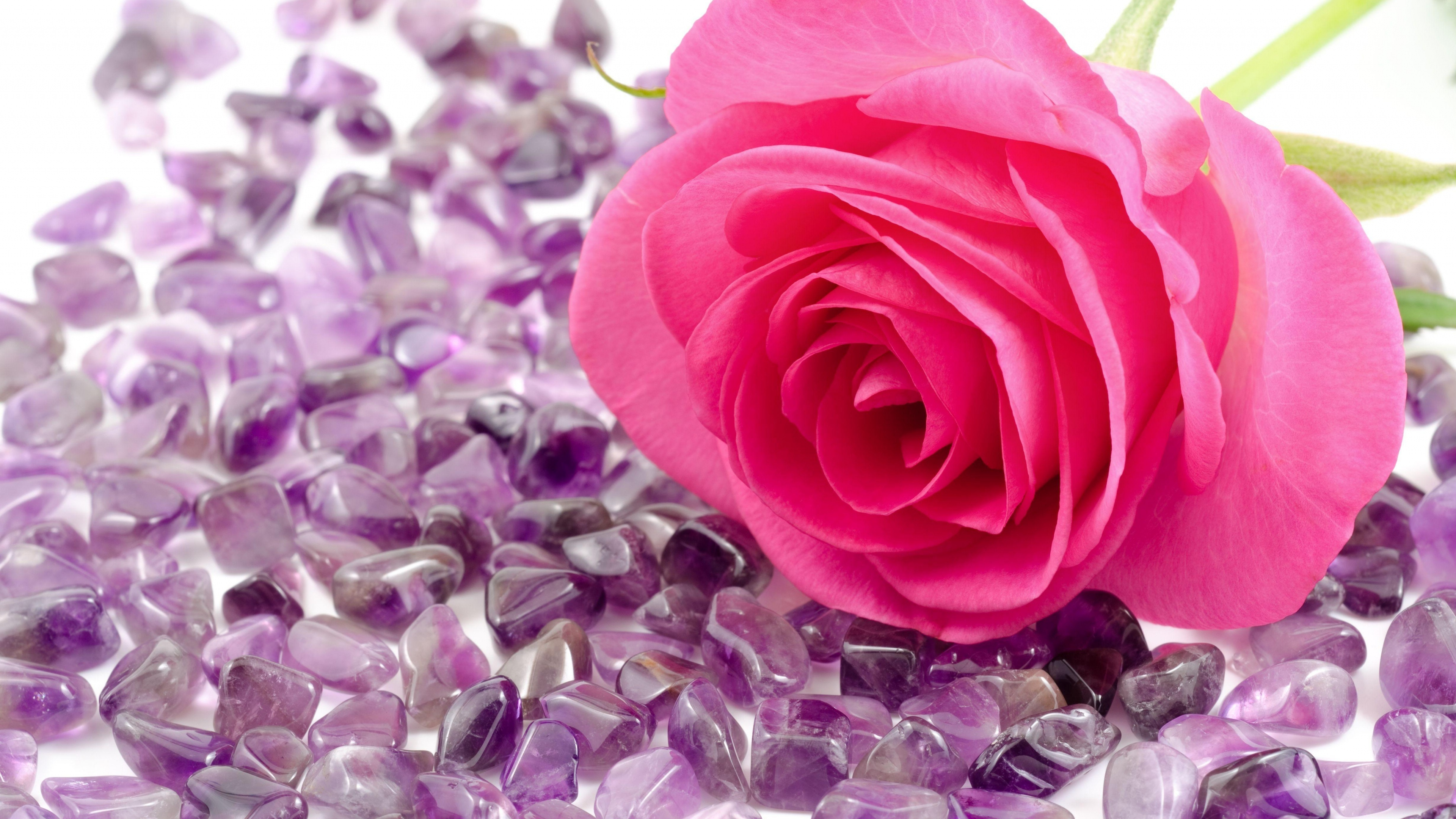 Pink rose on the many beautiful purple stones izmirmasajfo