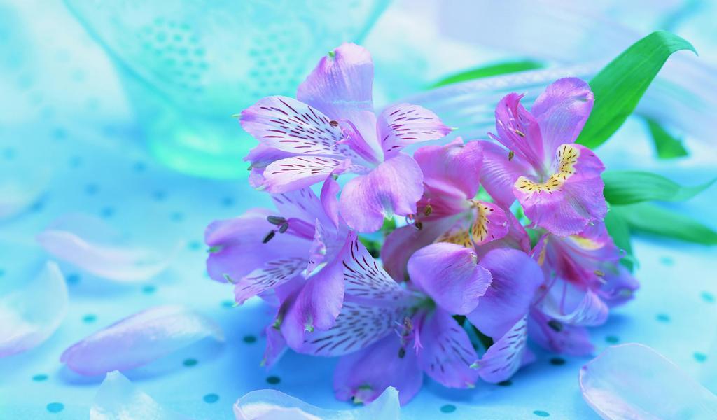 Funny Purple Flowers Hd Wallpaper: Beautiful HD Wallpaper Wallpaper