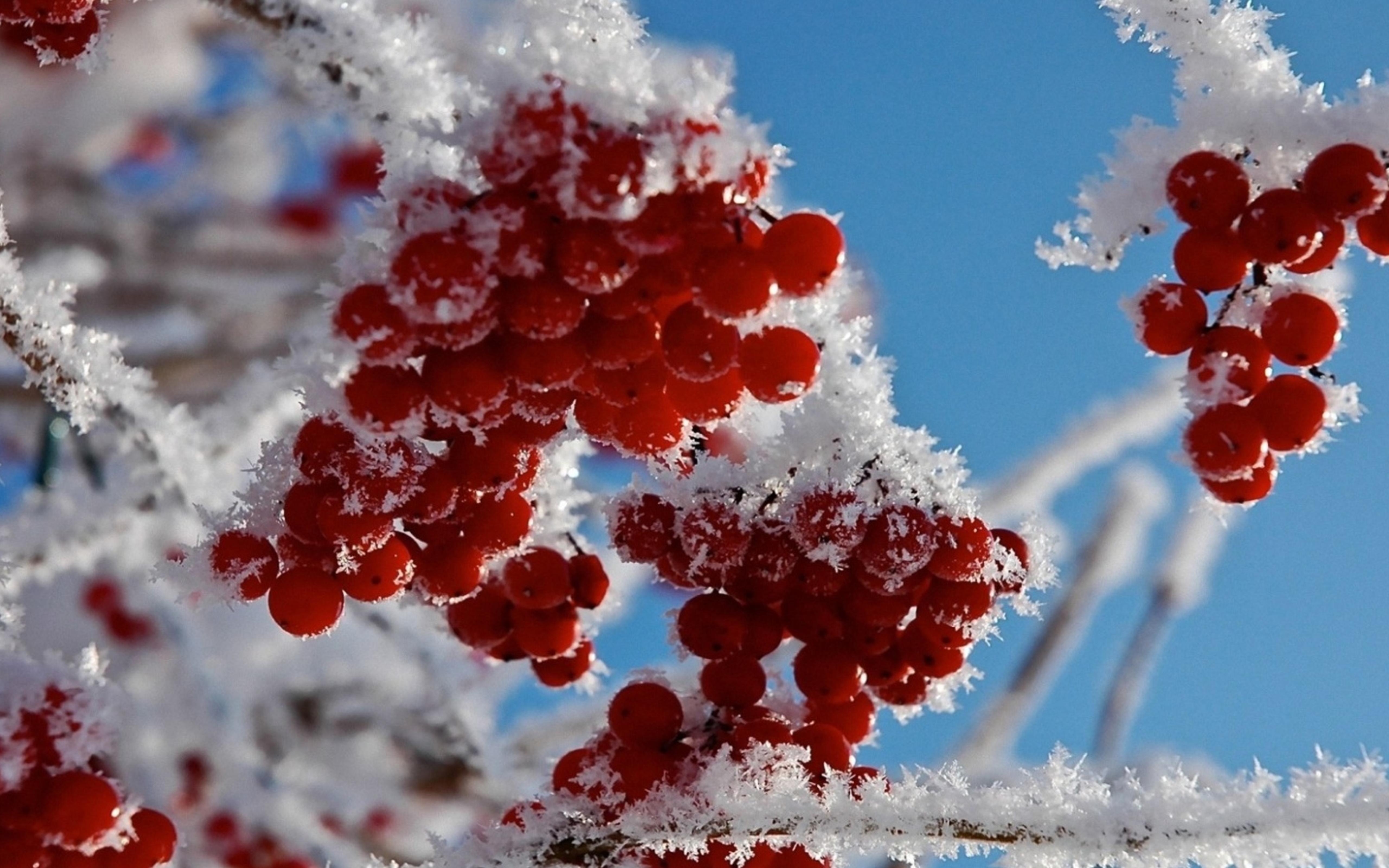 Зима красивые фотографии природы 6