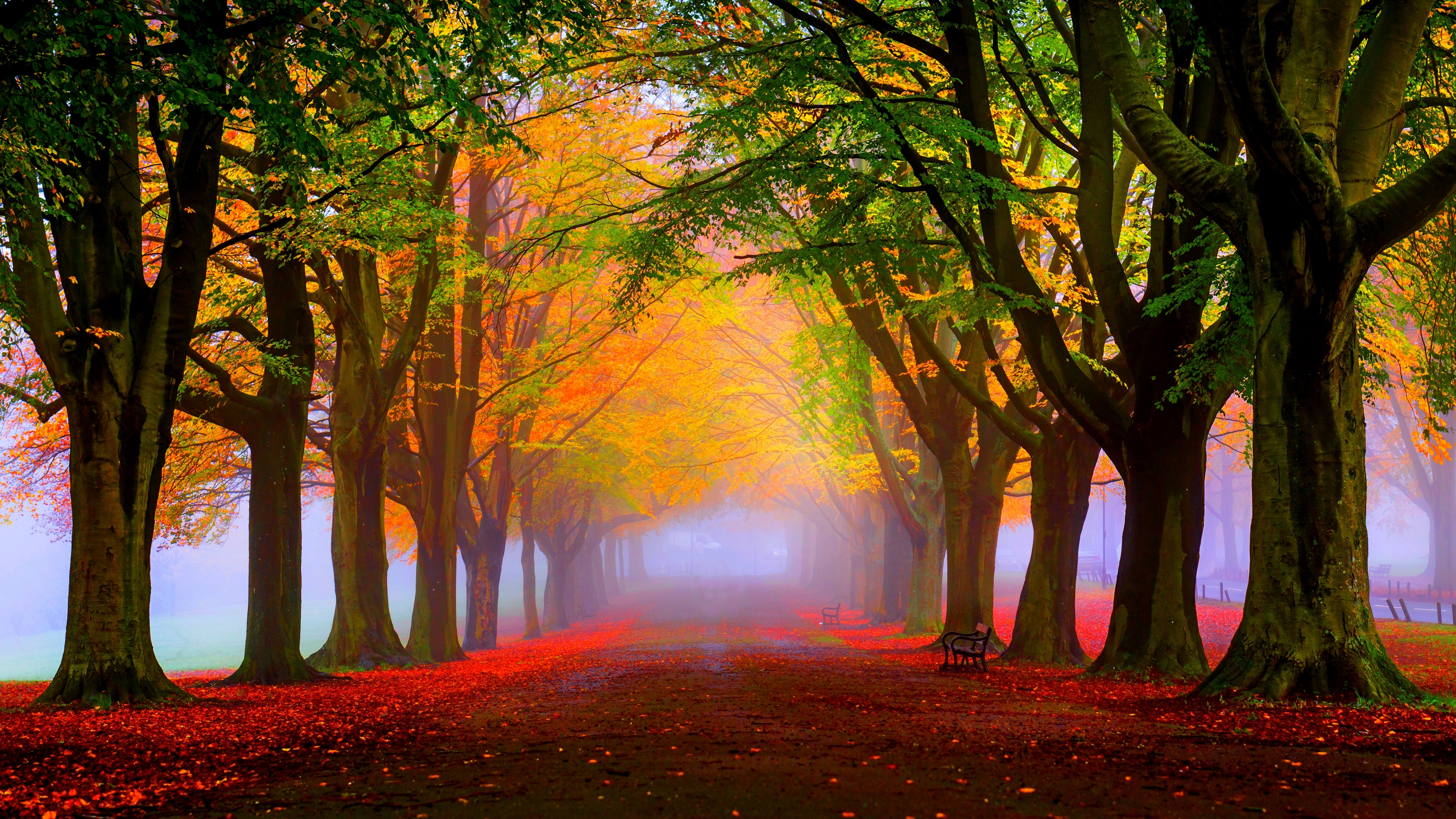 Red Leaves And Fog In The Park Autumn Landscape
