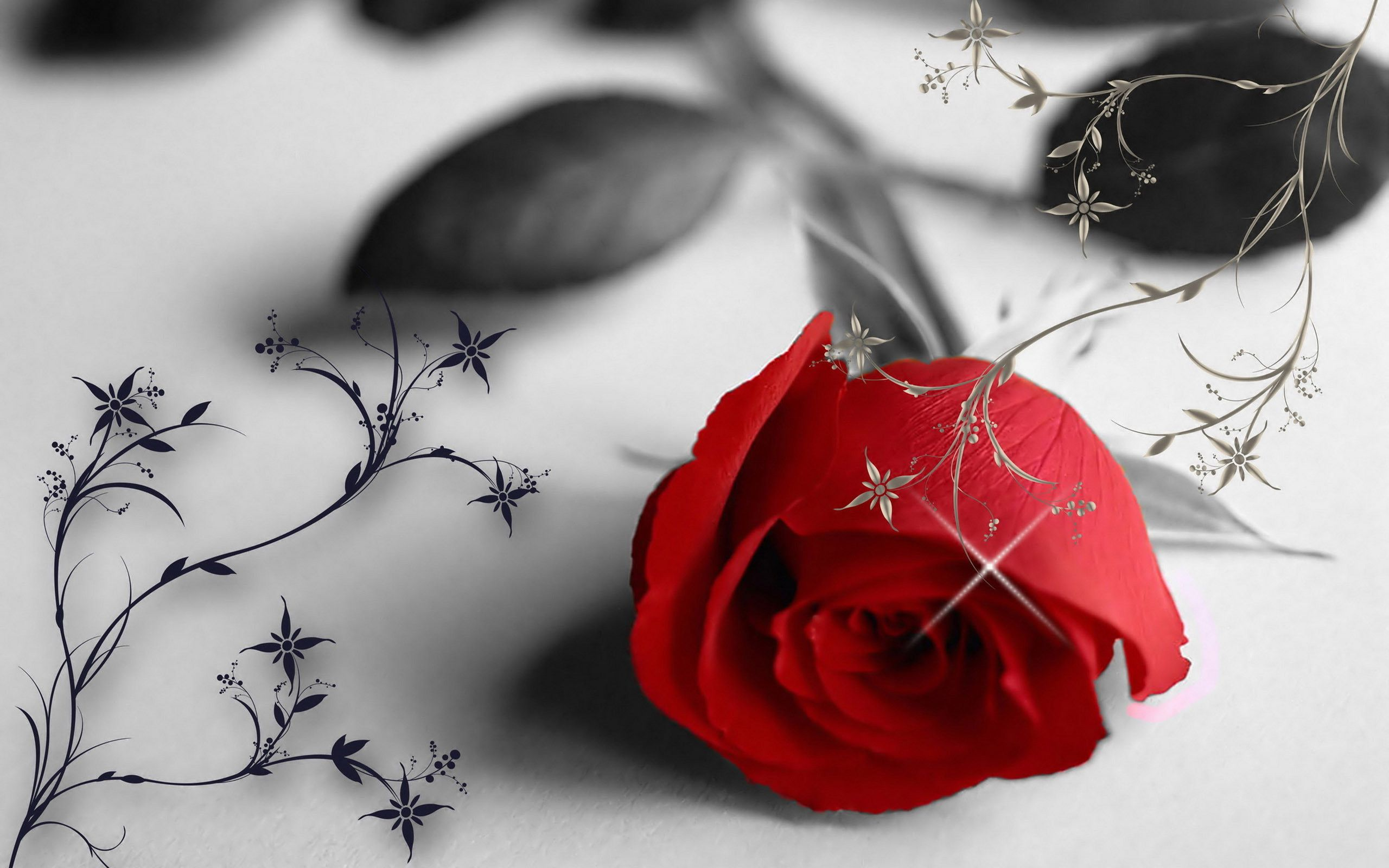 red rose in a black and white wallpaper - love moments