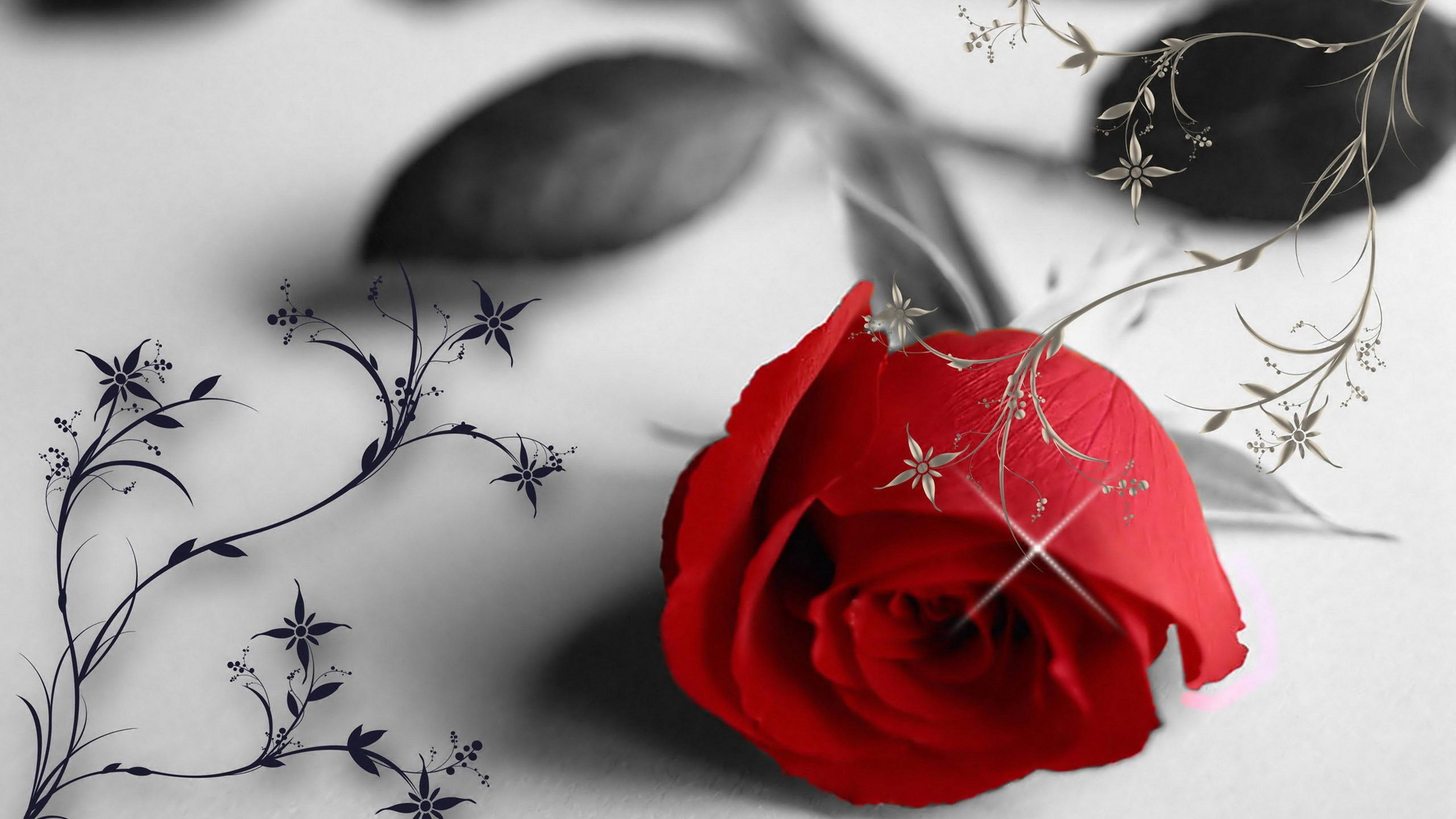 Must see Wallpaper Black And White Romantic - red-rose-in-a-black-and-white-wallpaper-love-moments-3840x2160  Pic_457874.jpg