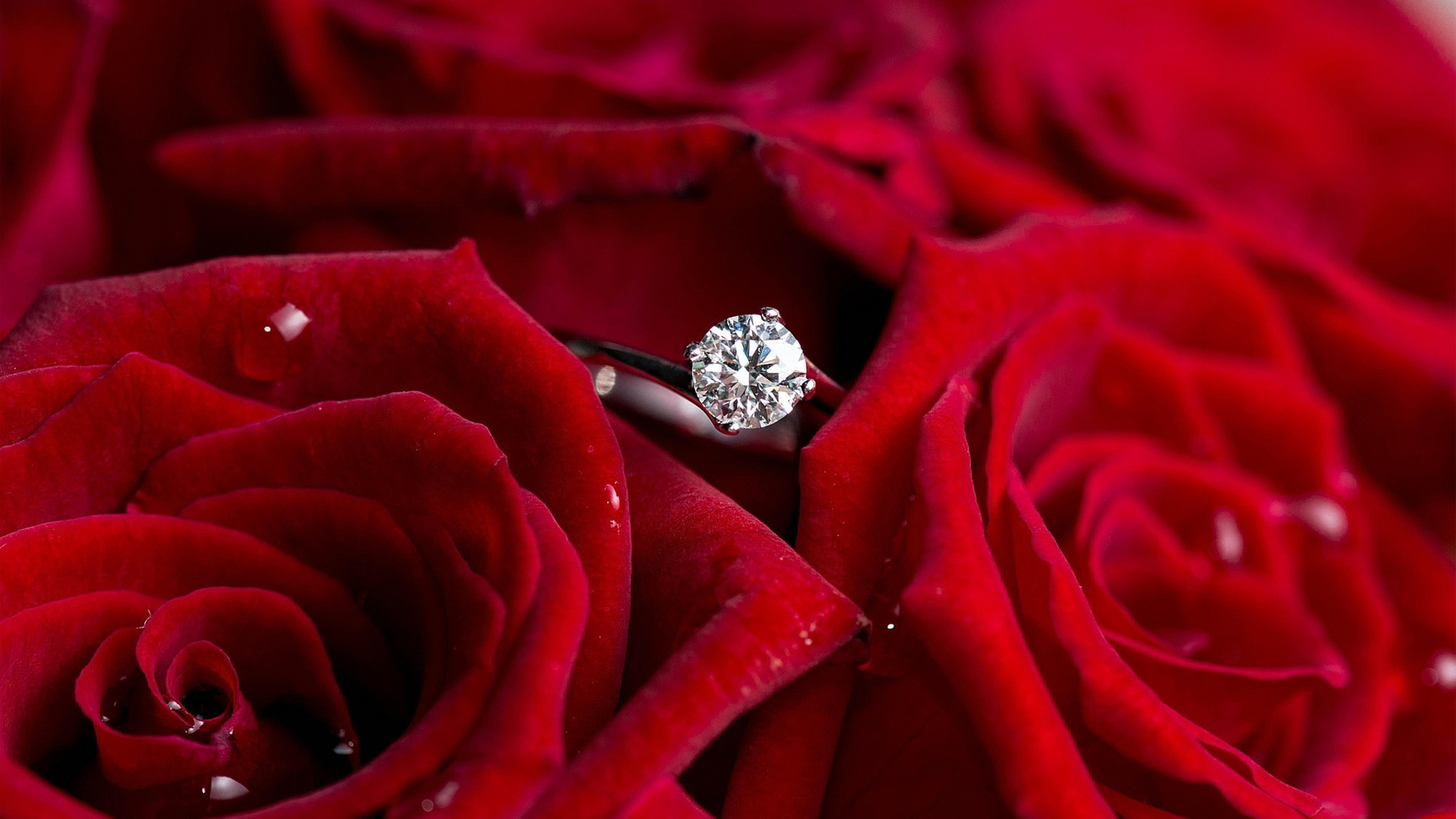 Download Wallpaper 5120x2880 Silver Ring For Marriage And Beautiful Red Roses