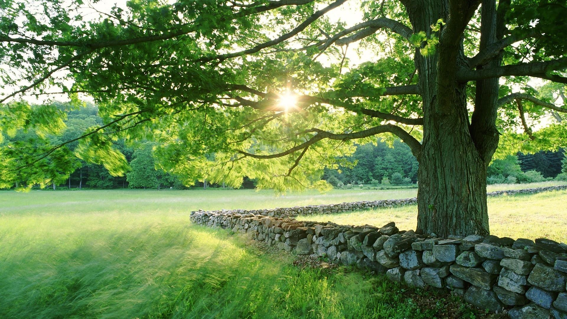 Summer sun over the beautiful green garden
