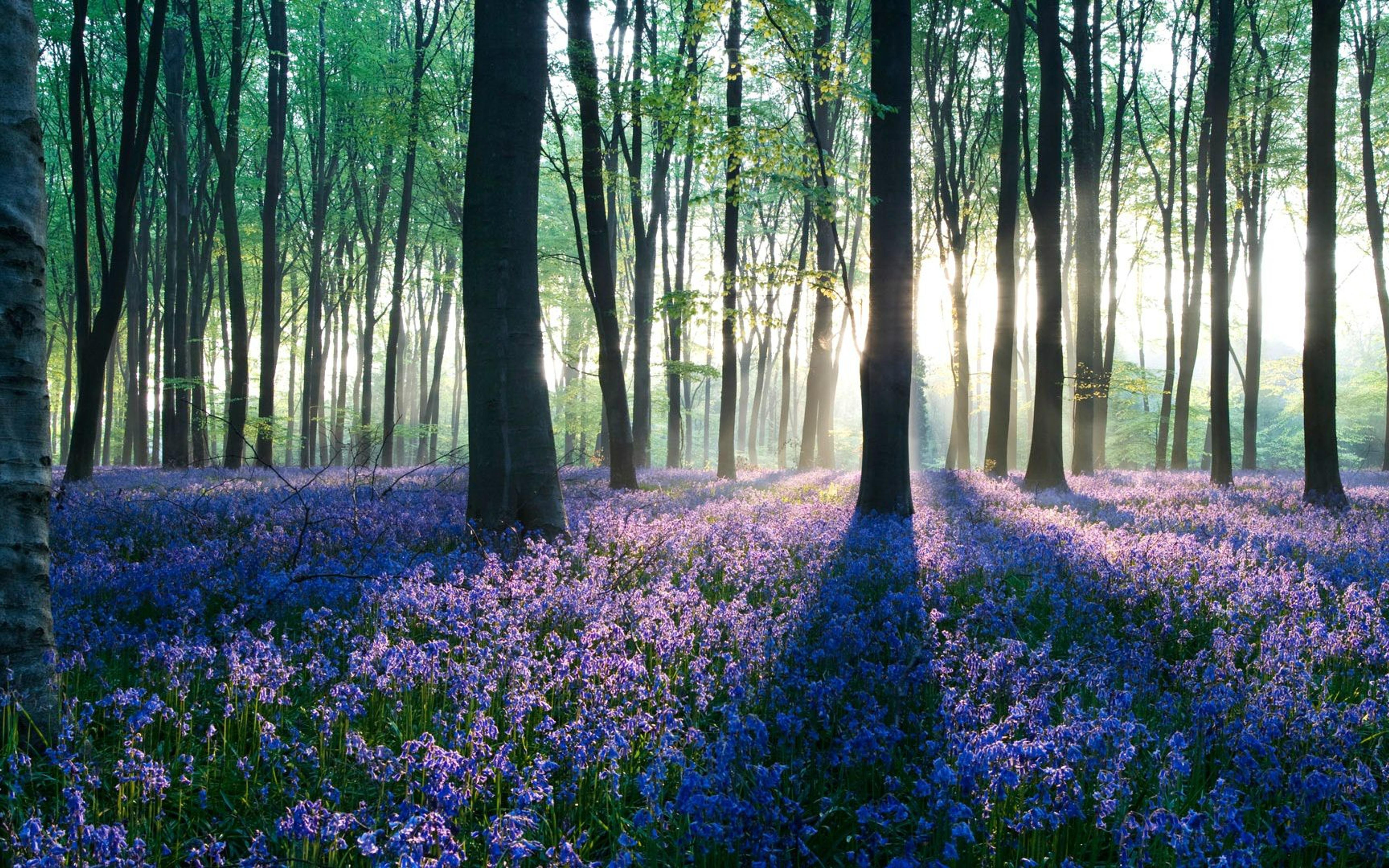 Фото природы в лесу в рассвет 4