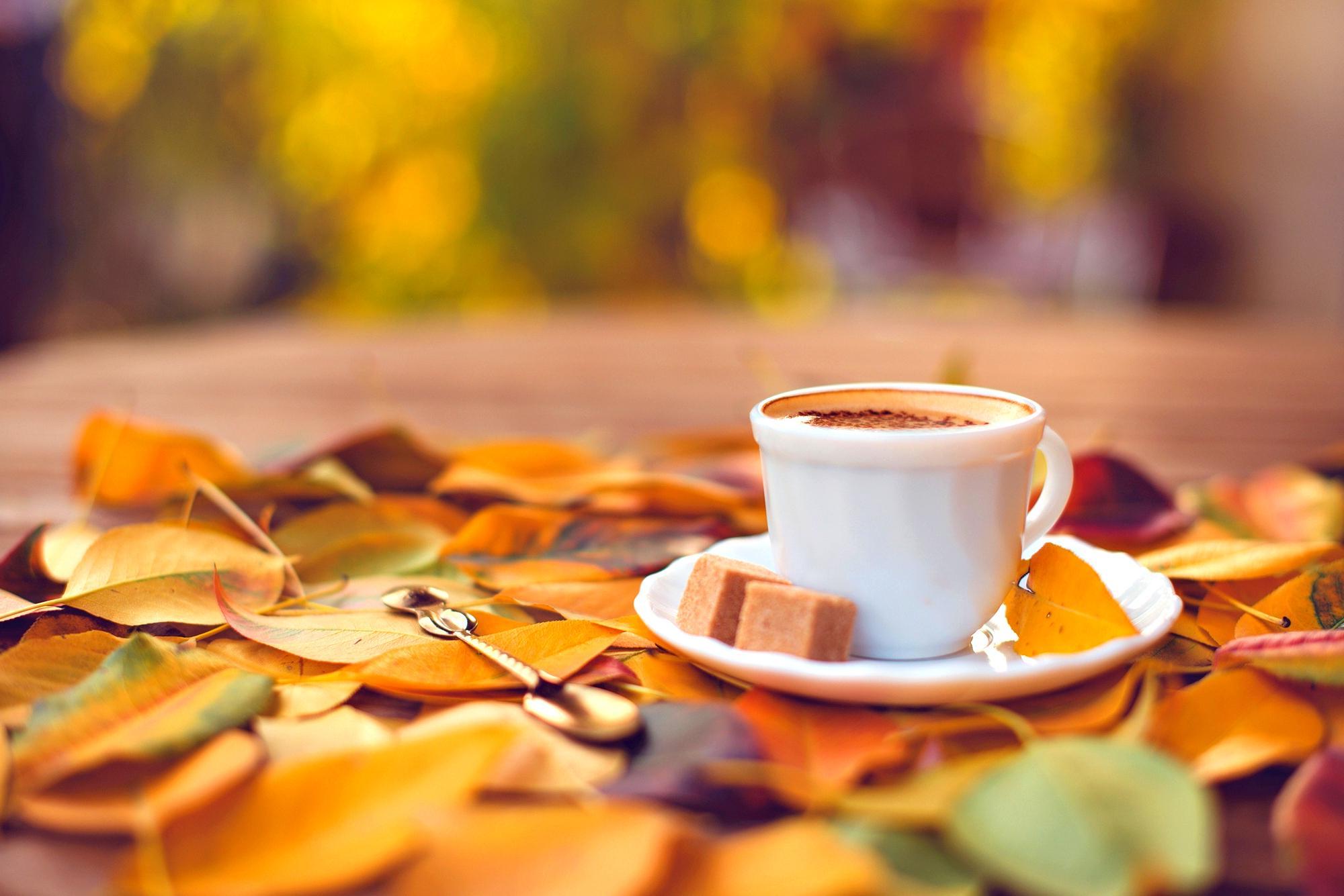Sweet Coffee And An Autumn Carpet HD Wallpaper