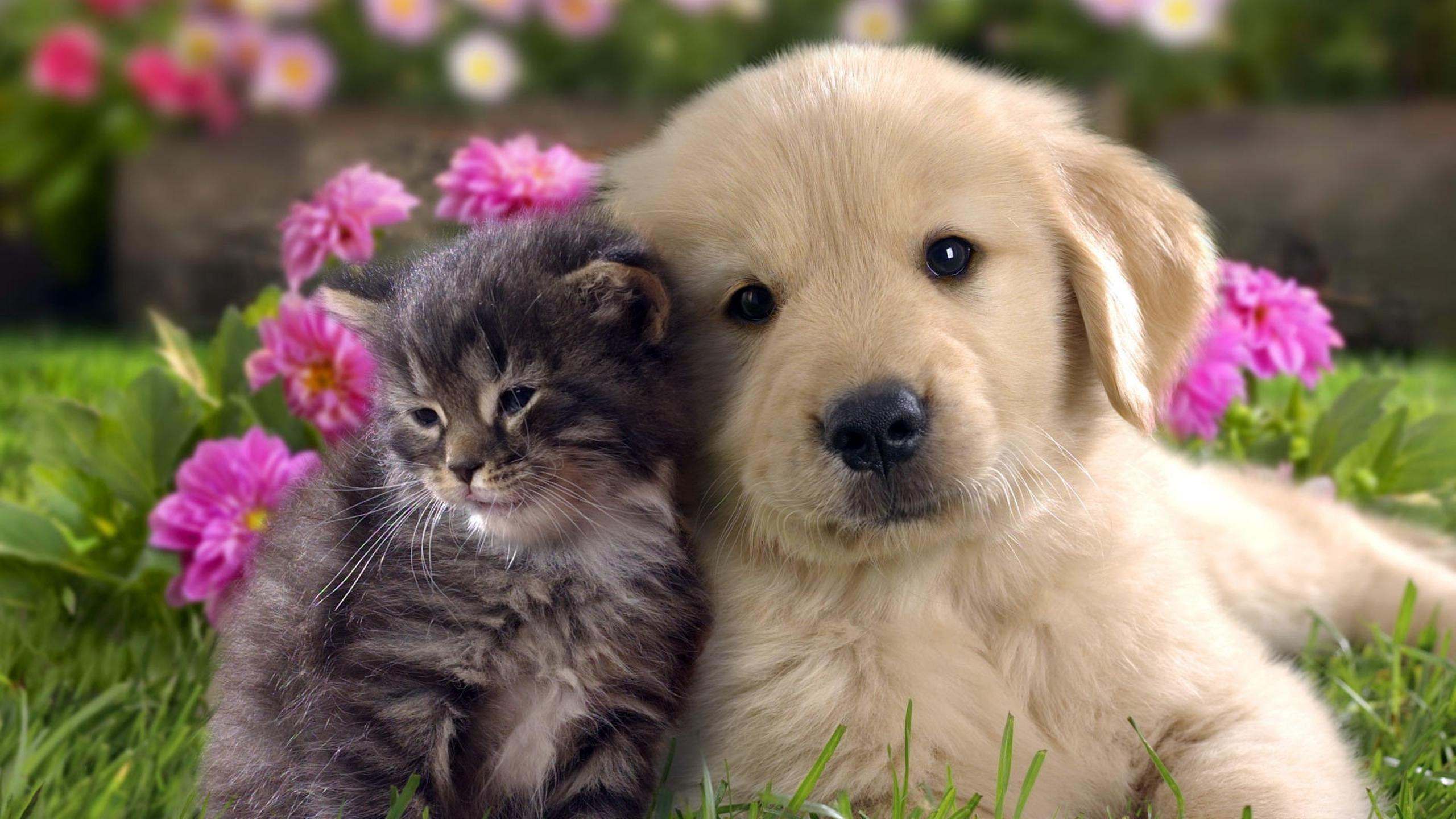 sweet dog and cat in the garden wallpaper download 2560x1440