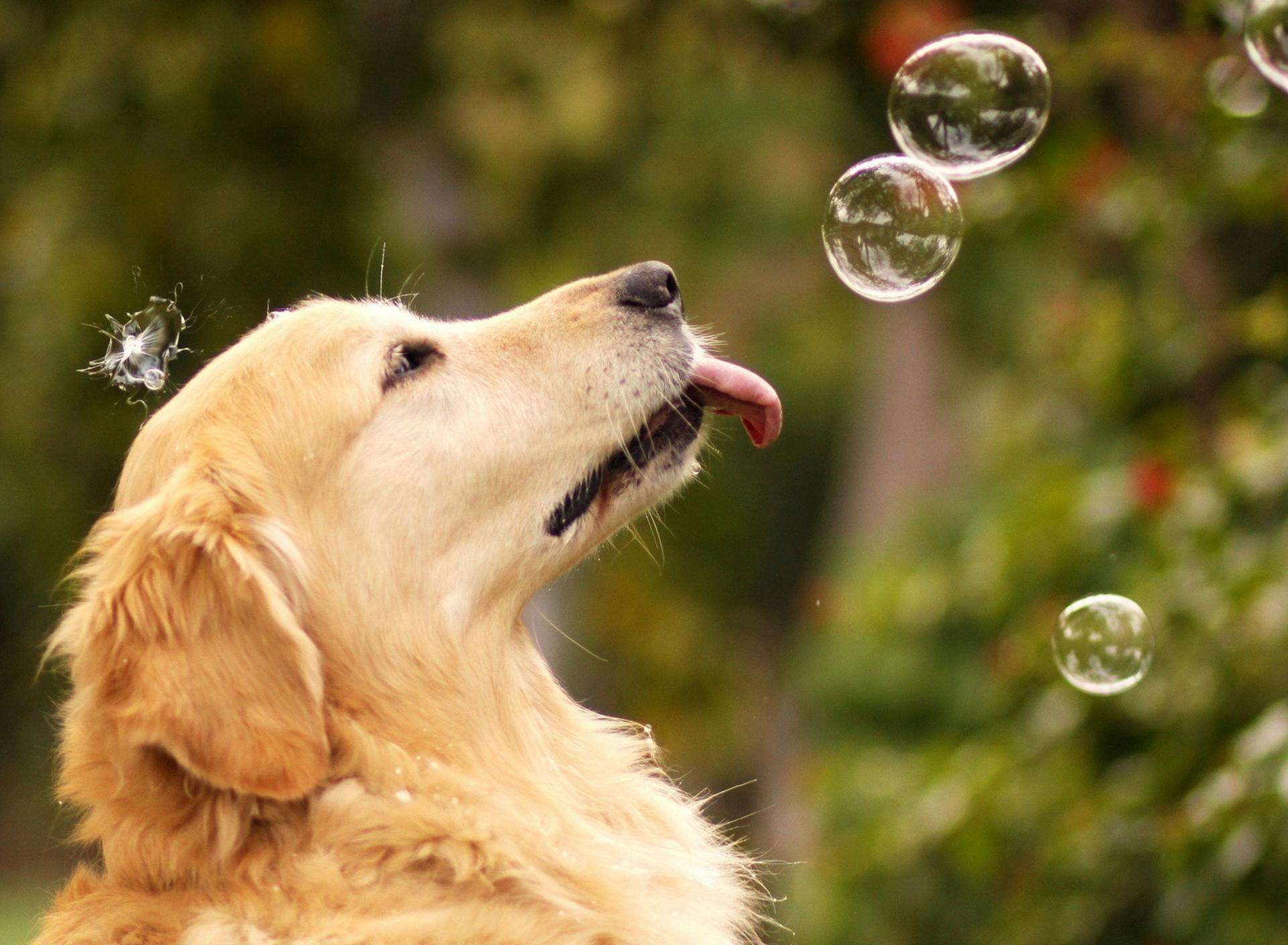 sweet dog play with water soap balloons wallpaper download 1920x1408