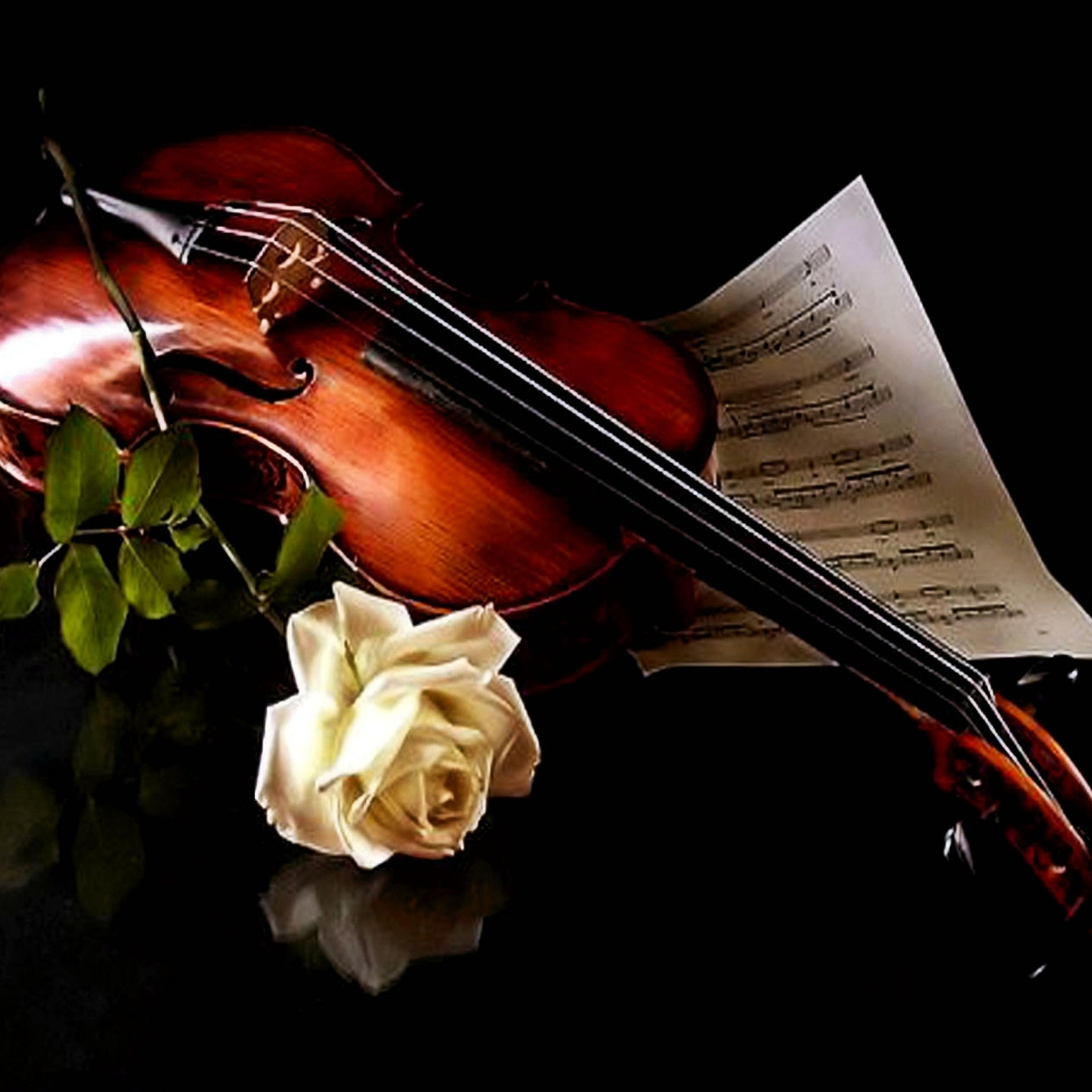The Music Of Violin And A Beautiful White Rose Wallpaper Download 2524x2524
