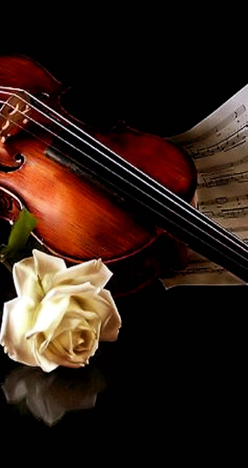 The Music Of Violin And A Beautiful White Rose Wallpaper Download
