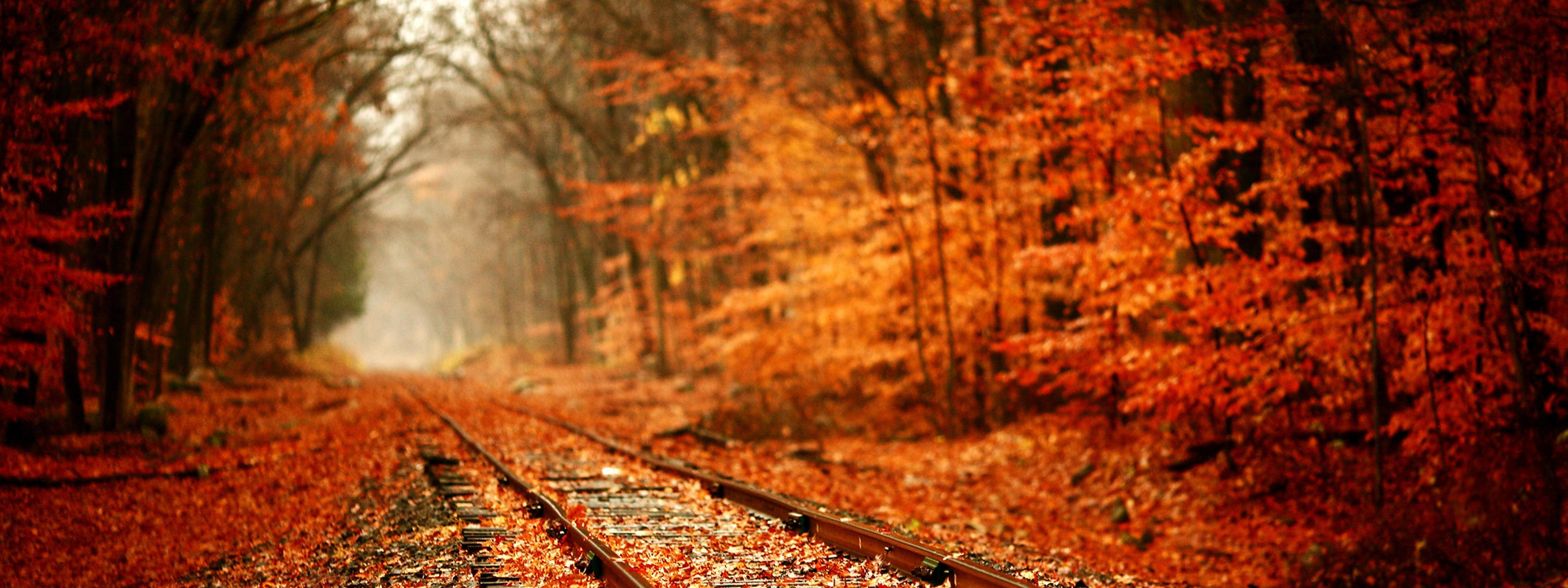 Train Tracks Covered With Autumn Leaves Wallpaper Download