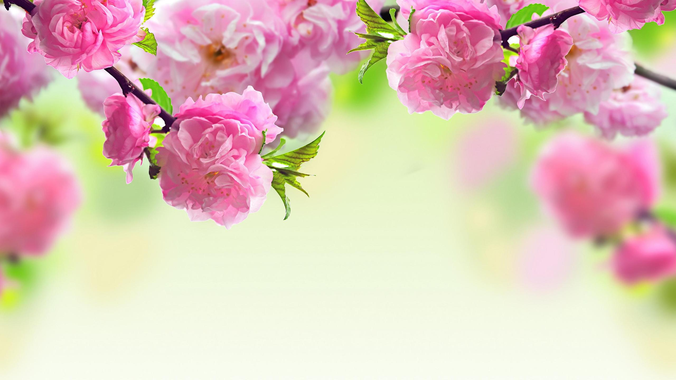 Tree blossoming - Beautiful pink spring flowers Wallpaper Download ...