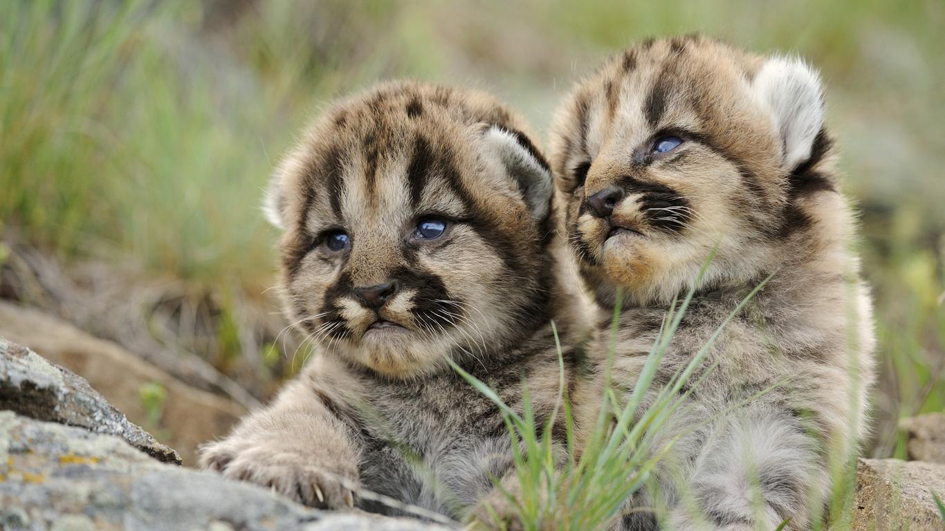 Download Wallpaper 1366x768 Two Amazing Baby Animals