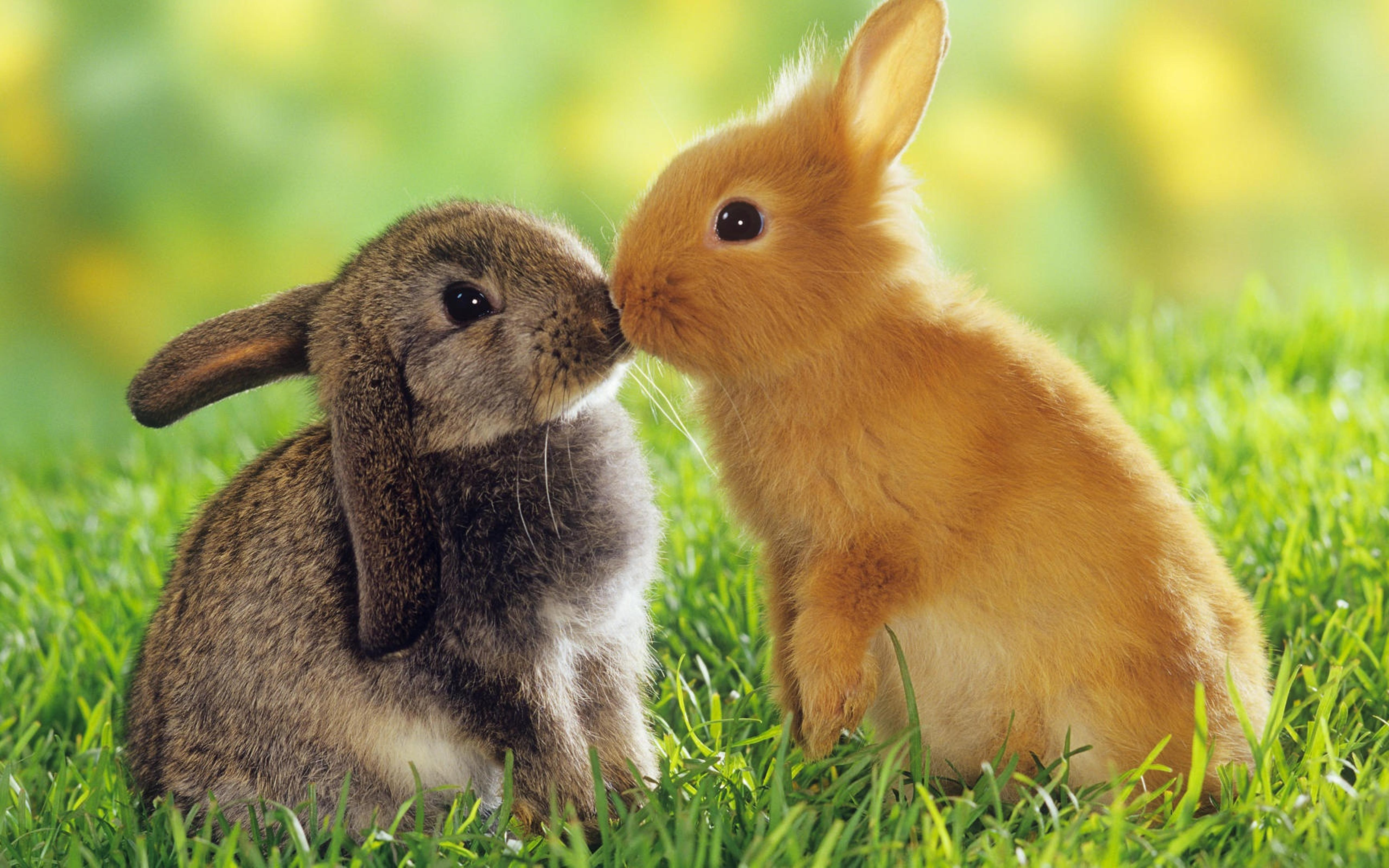 Download Wallpapers Download 2790x2547 Animals Grass: Sweet Animals In The Grass Wallpaper
