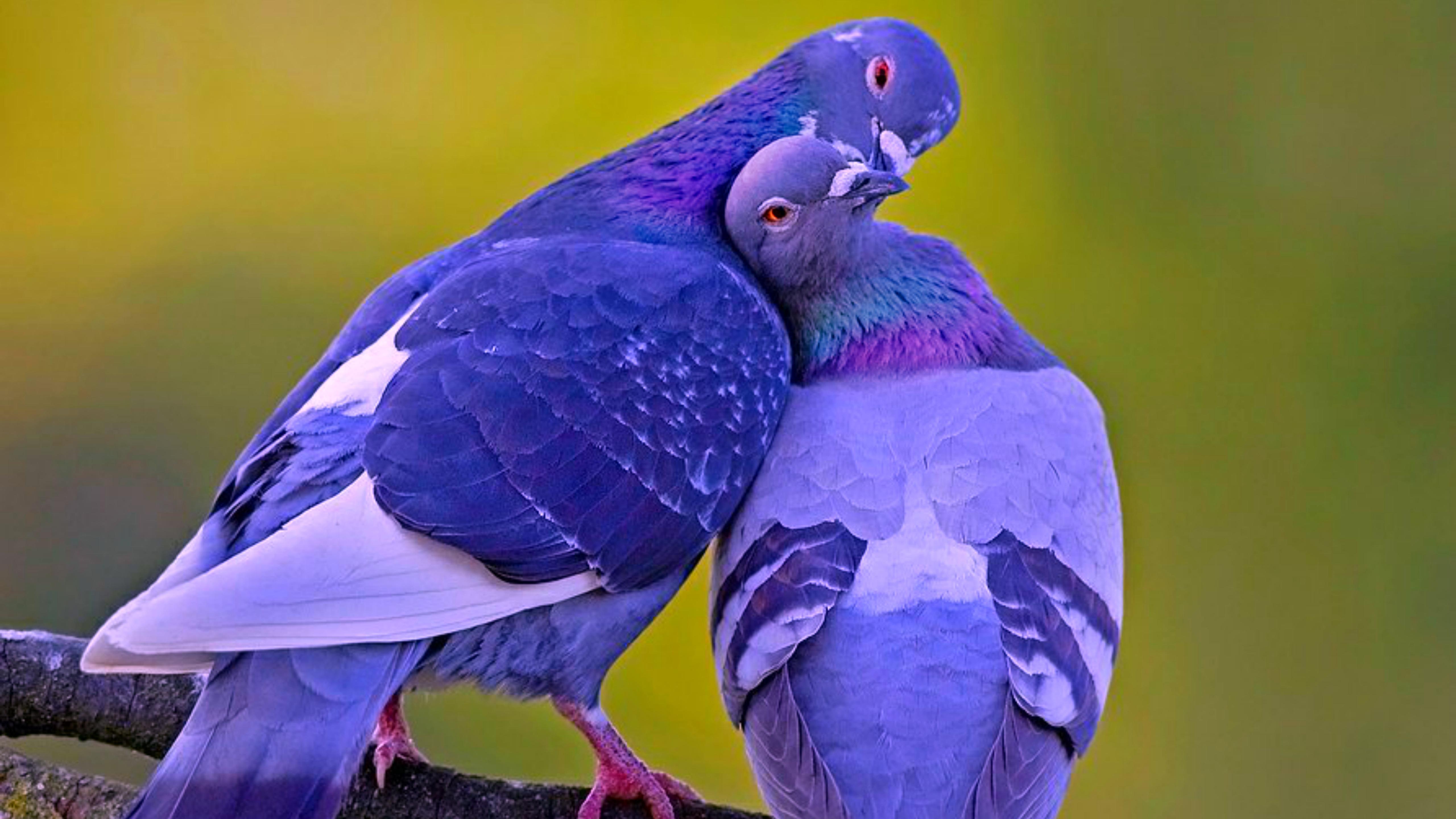 Секс с птицей фото 11 фотография