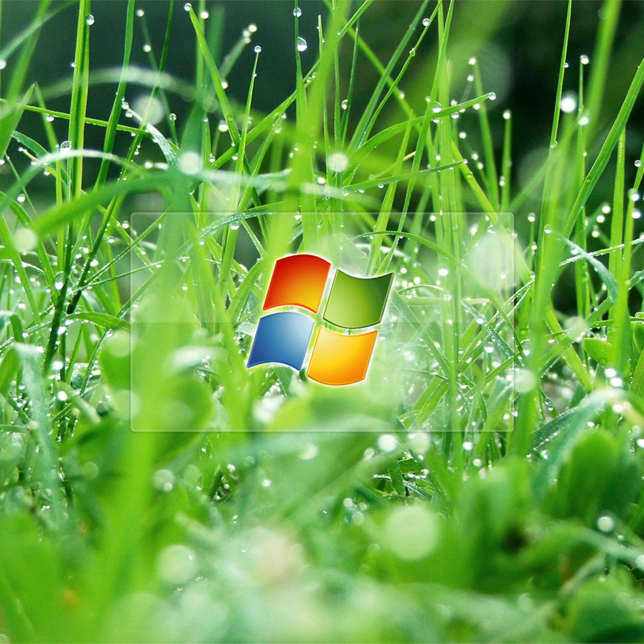 windows glass in the grass with dew drops wallpaper