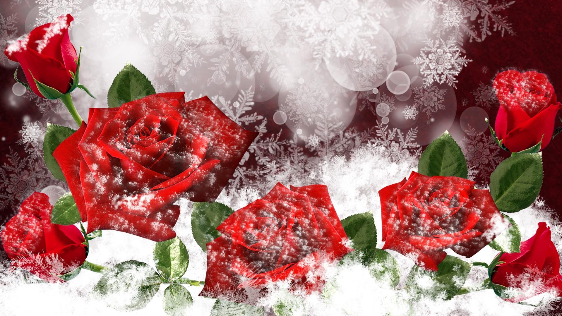 Wonderful Red Frozen Roses Hd Winter Wallpaper