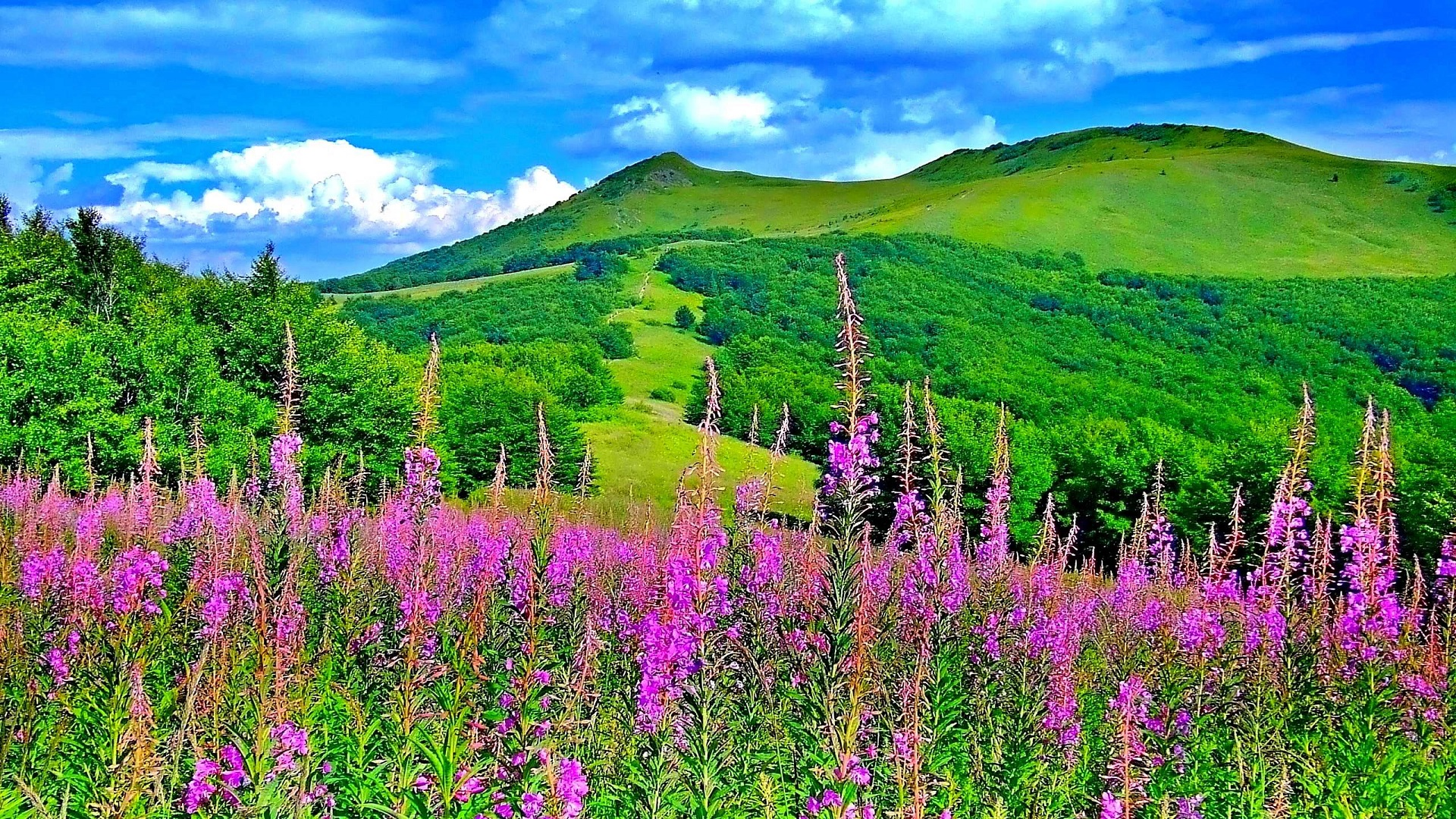 Wonderful Spring Colours In The Nature Flowers And Mountains