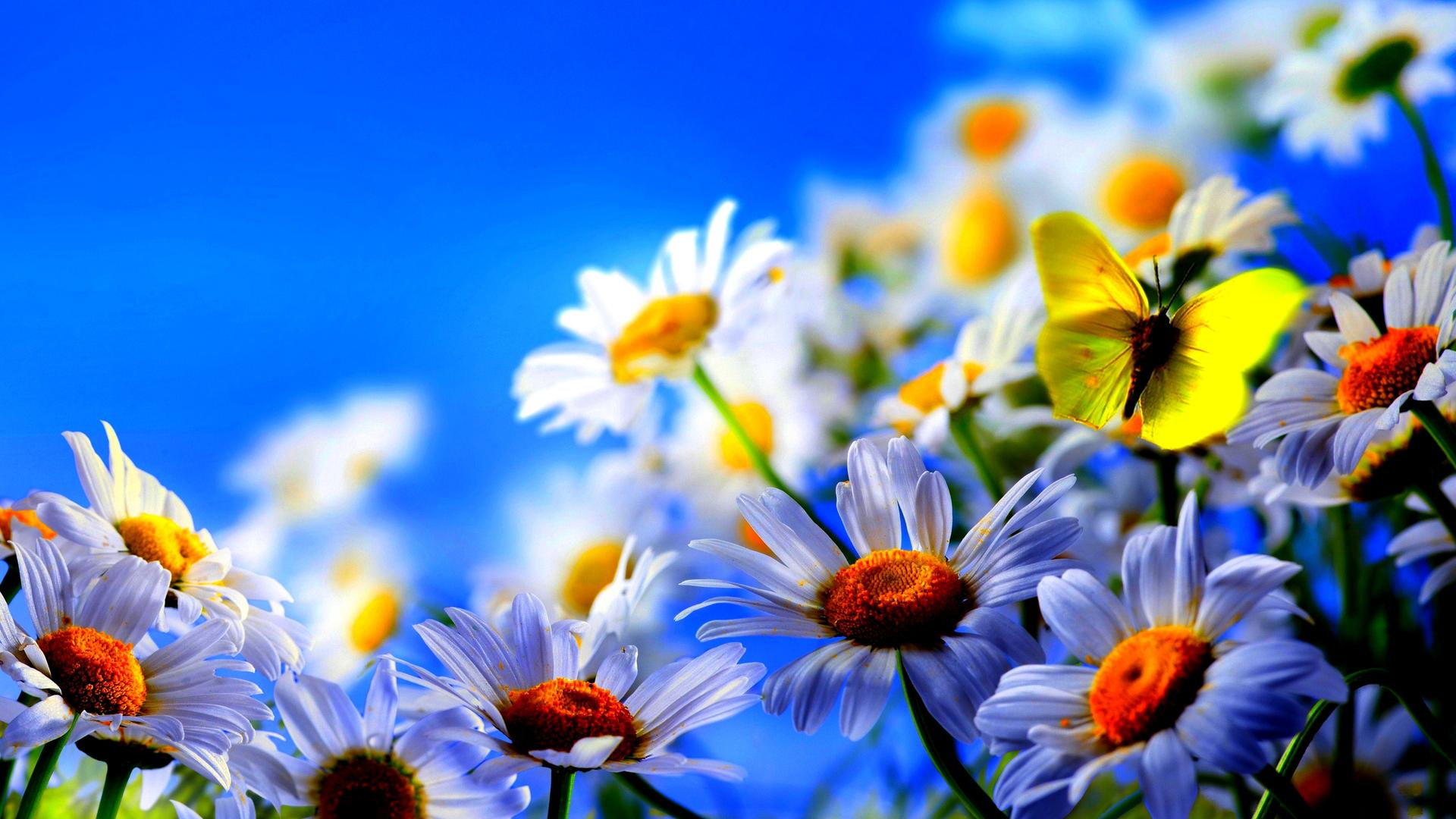 Yellow butterfly on the beautiful spring flowers Wallpaper ...
