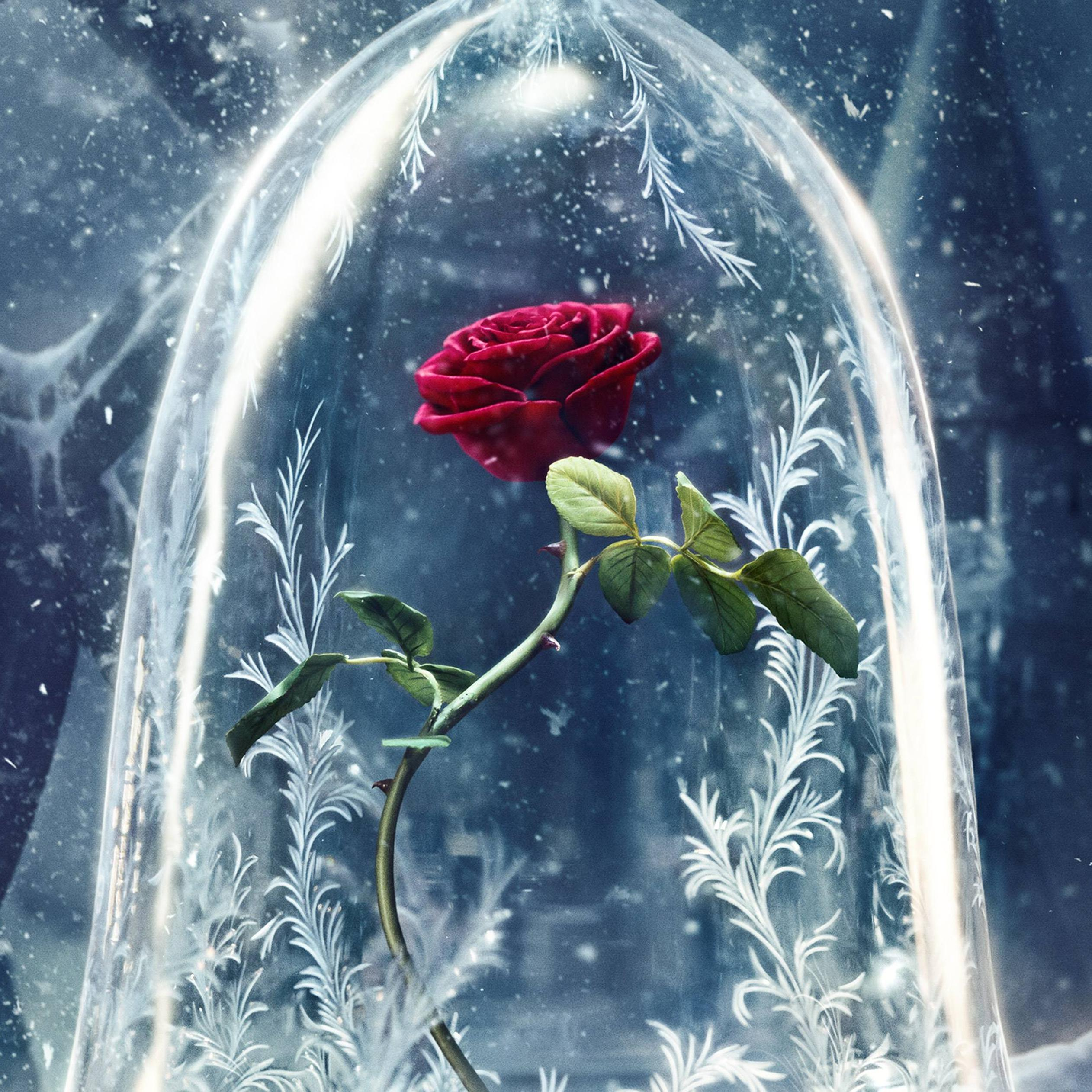 Wonderful Red Rose In A Crystal Globe Hd Wallpaper