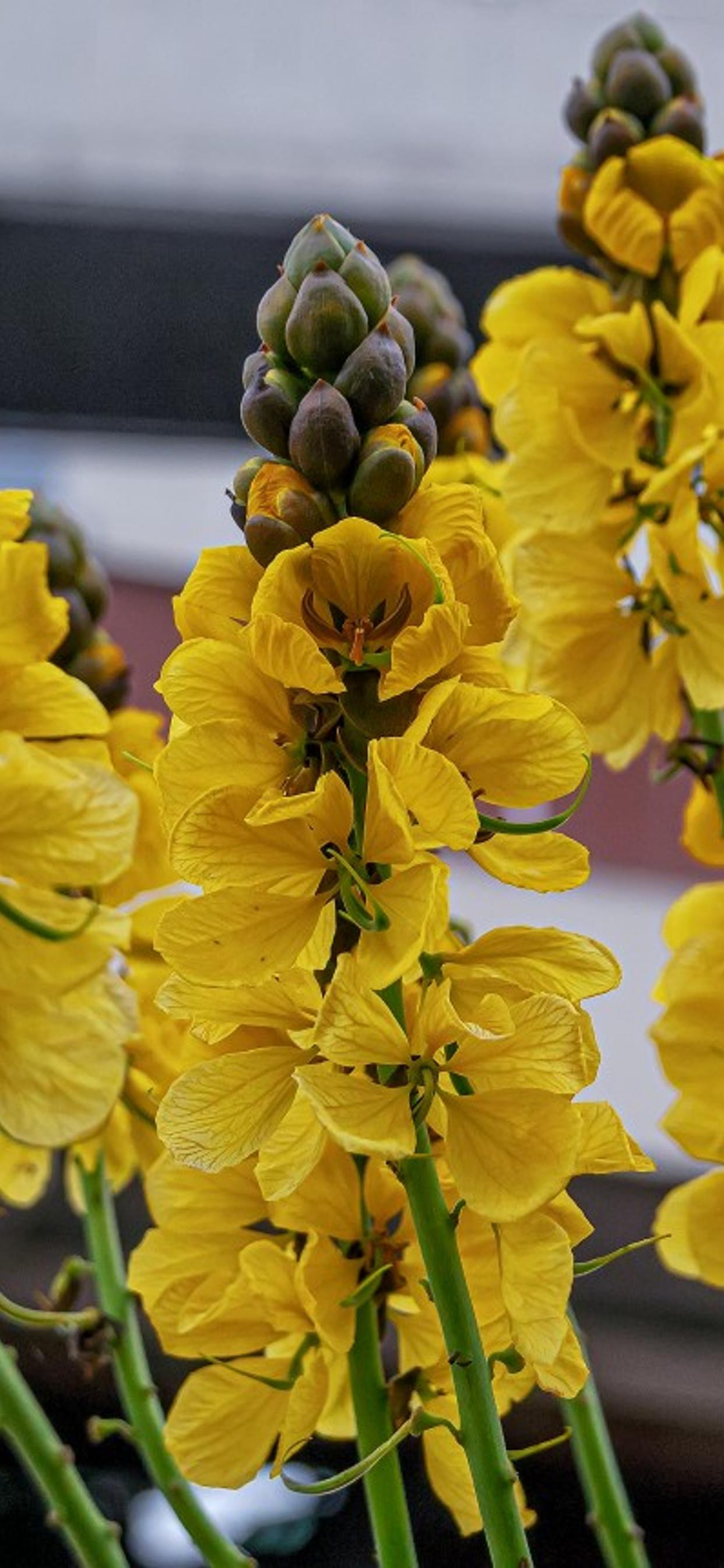 Yellow Flower In The Garden Hd Wallpaper
