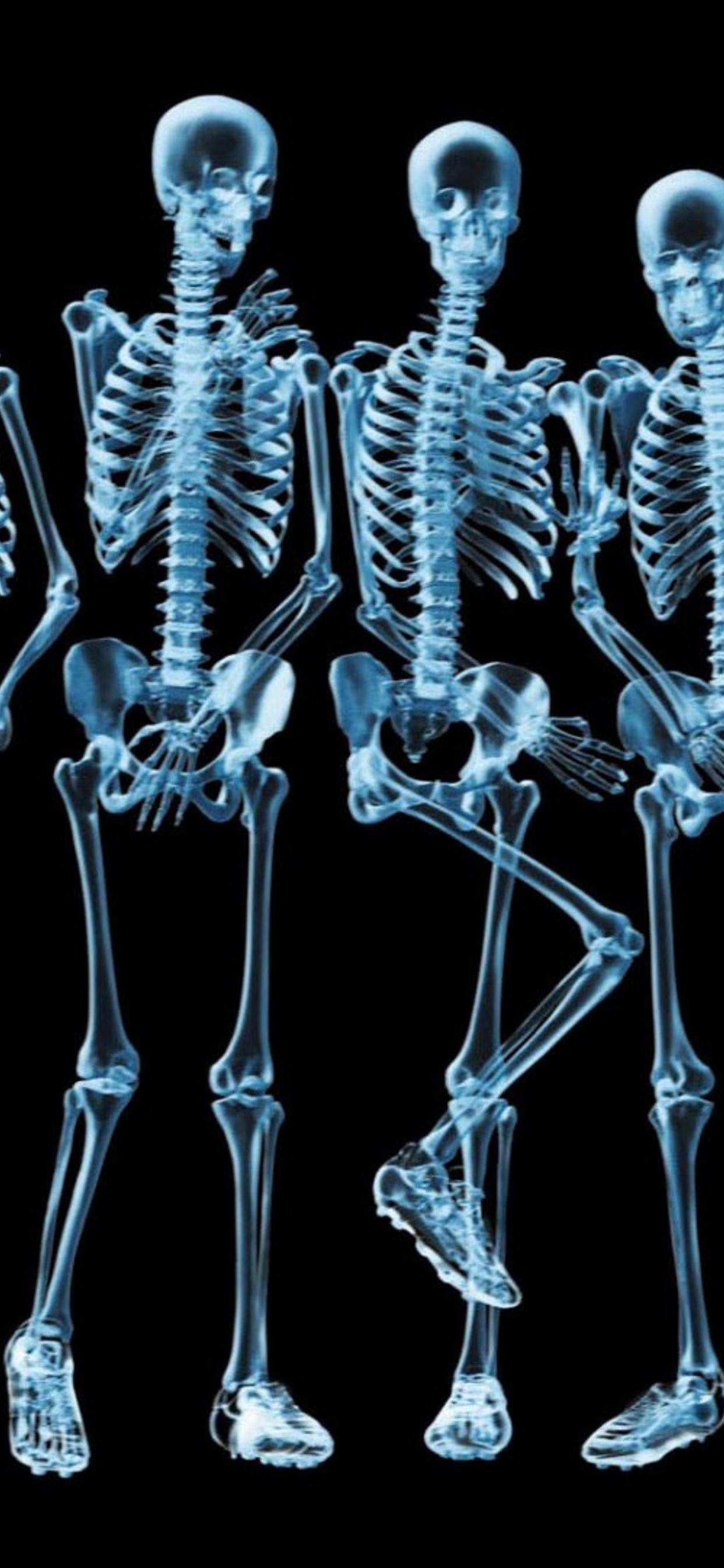 Funny Skeletons Naked Hd Wallpaper