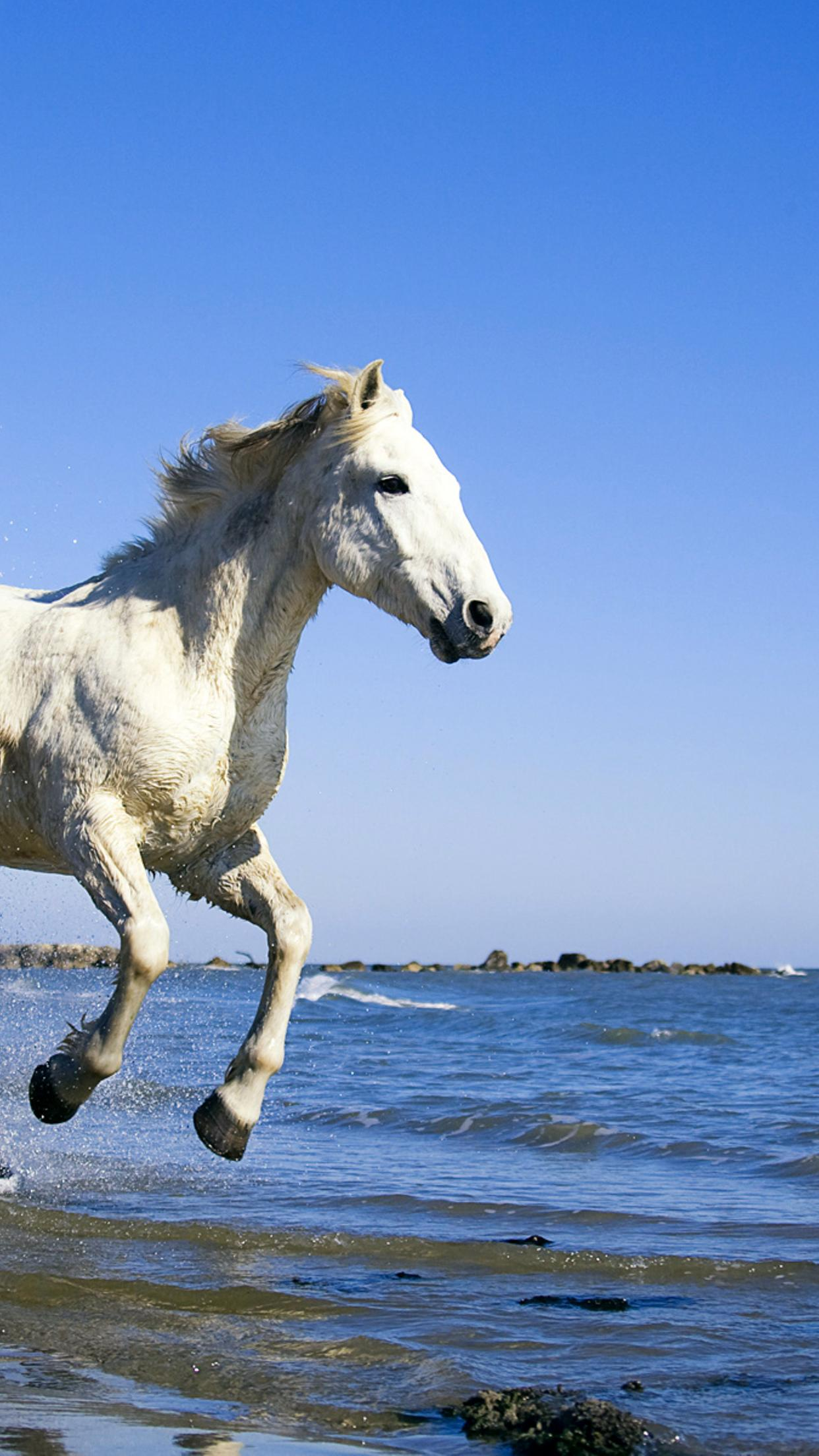 White Horse Running In Water