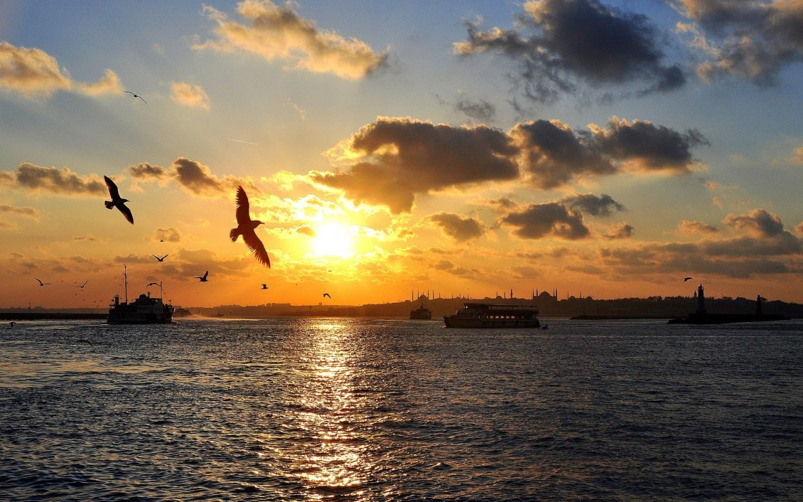 Sunset Wallpaper The Birds Flying Over The Sea