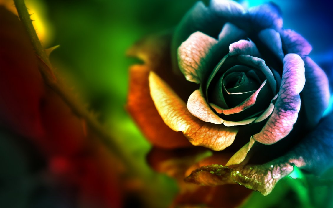 The Rose In Many Colors Artistic And Abstract Wallpaper