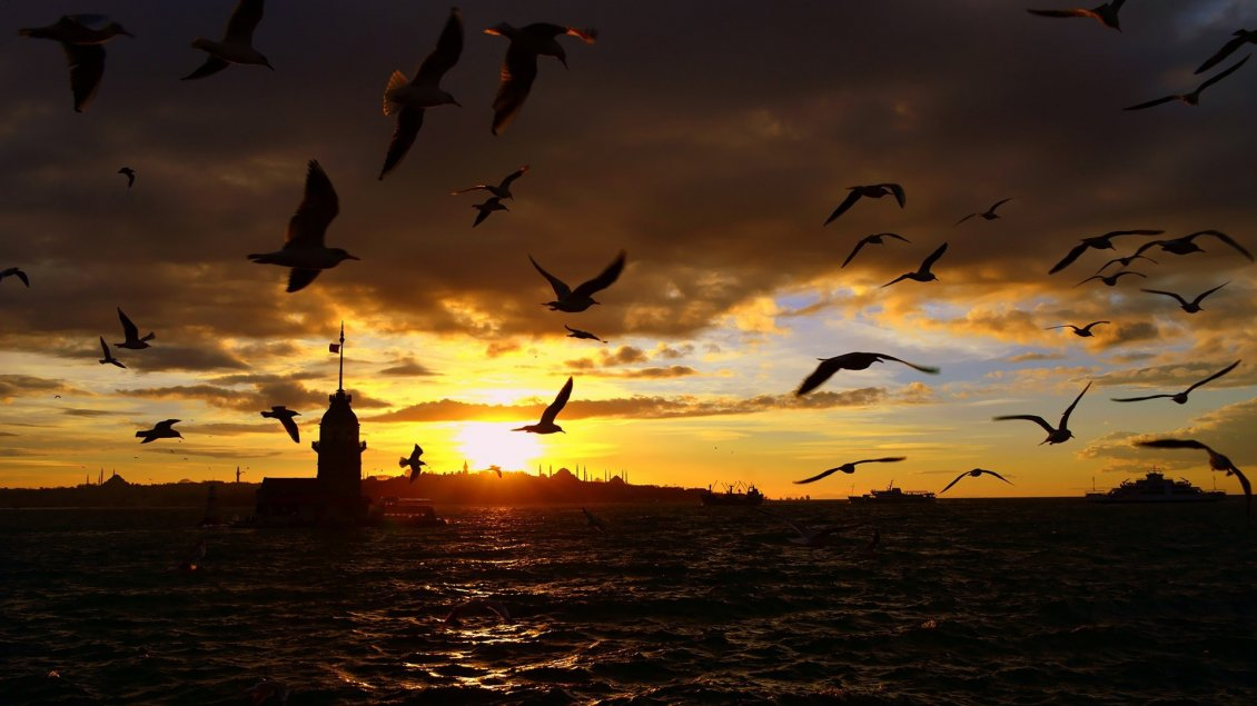 Download Wallpaper Many crows flies above the sea in the sunset