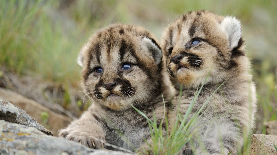 Download Wallpaper Two amazing baby animals - HD wallpaper