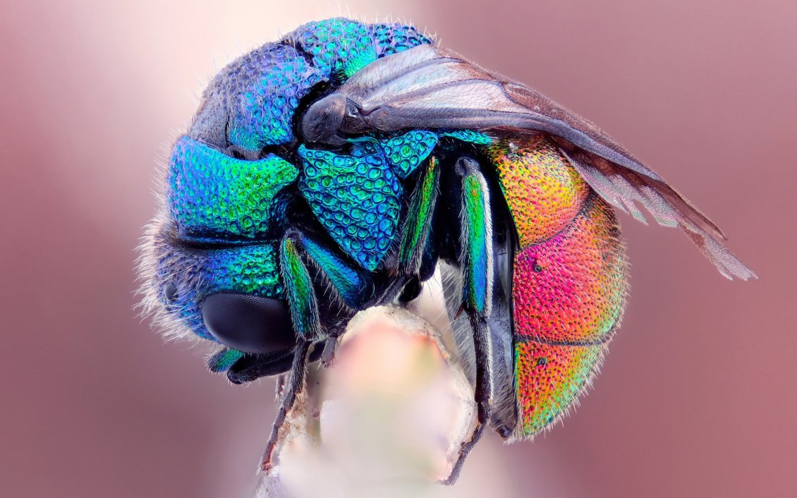 Download Wallpaper An crooked insect in rainbow colors