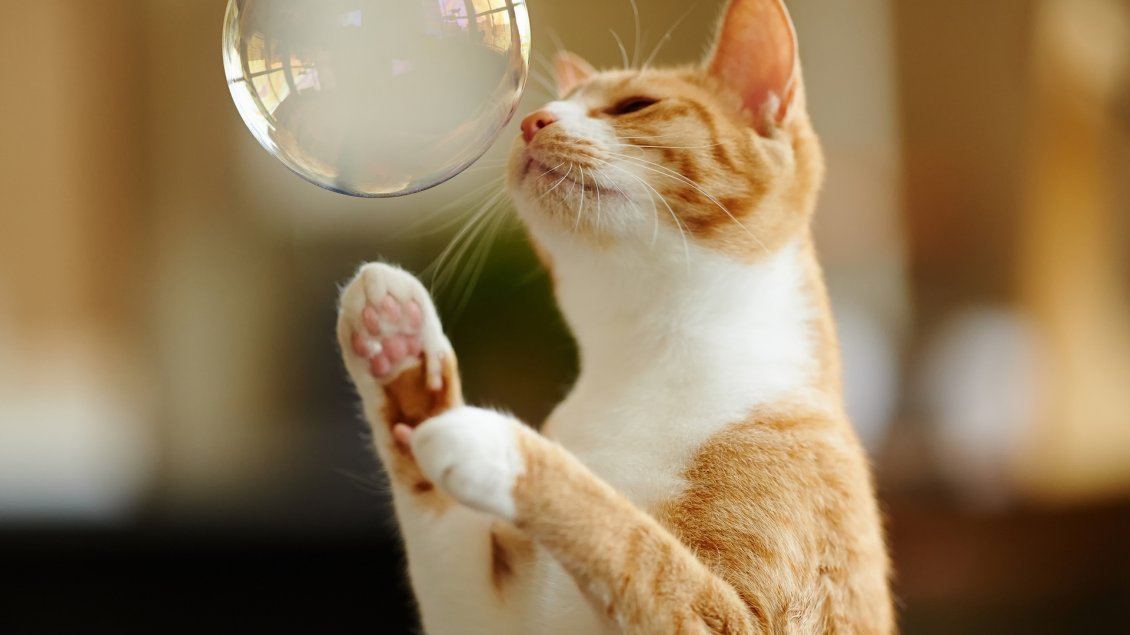 Download Wallpaper A sweet yellow cat playing with a white bubble