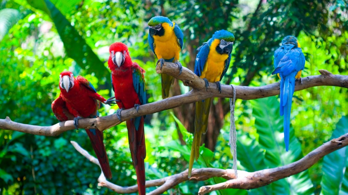 Download Wallpaper Many colorful parrots on a tree branch