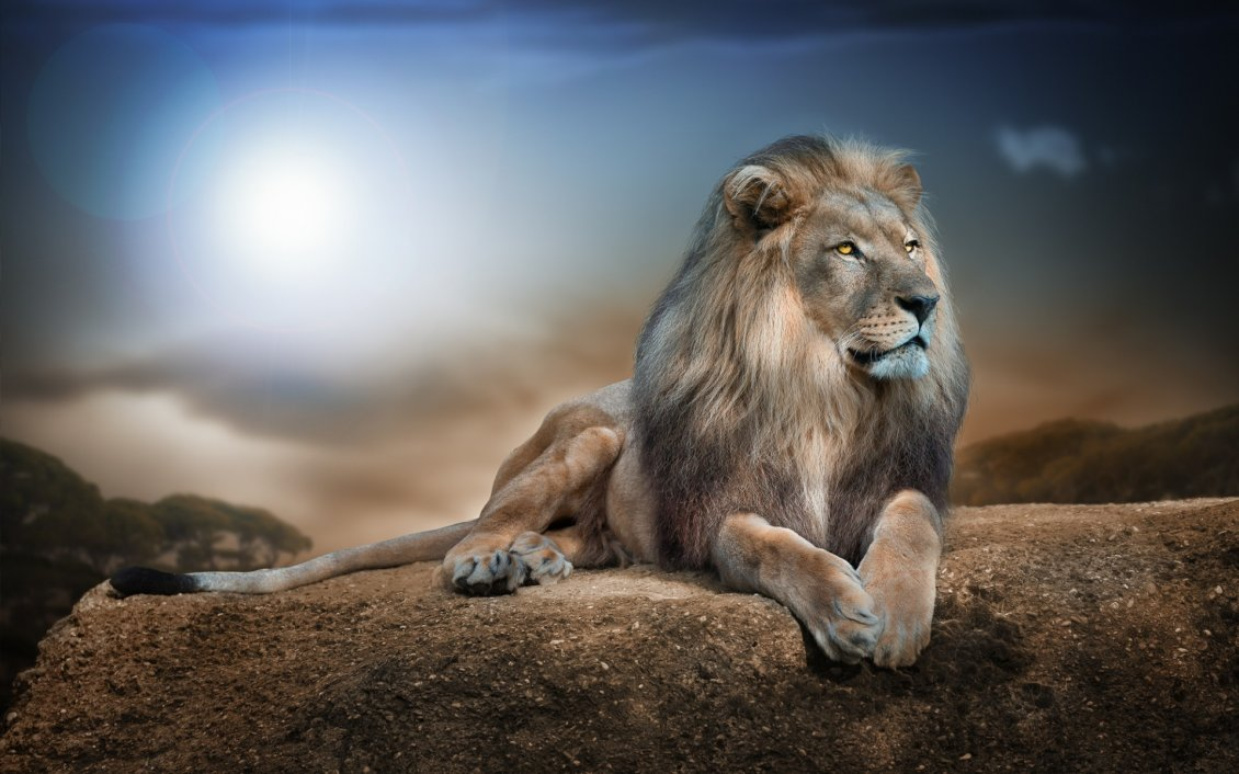 Gorgeous Lion On A Big Rock In Jungle