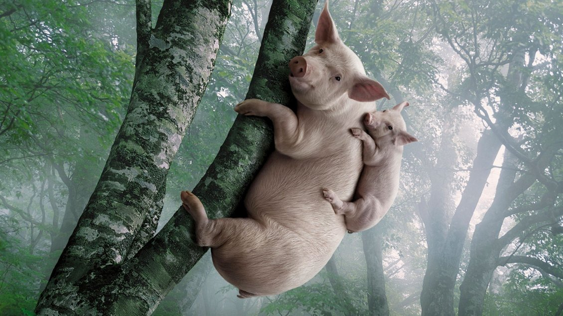 Big And Small Pigs In The Tree Funny Wallpaper