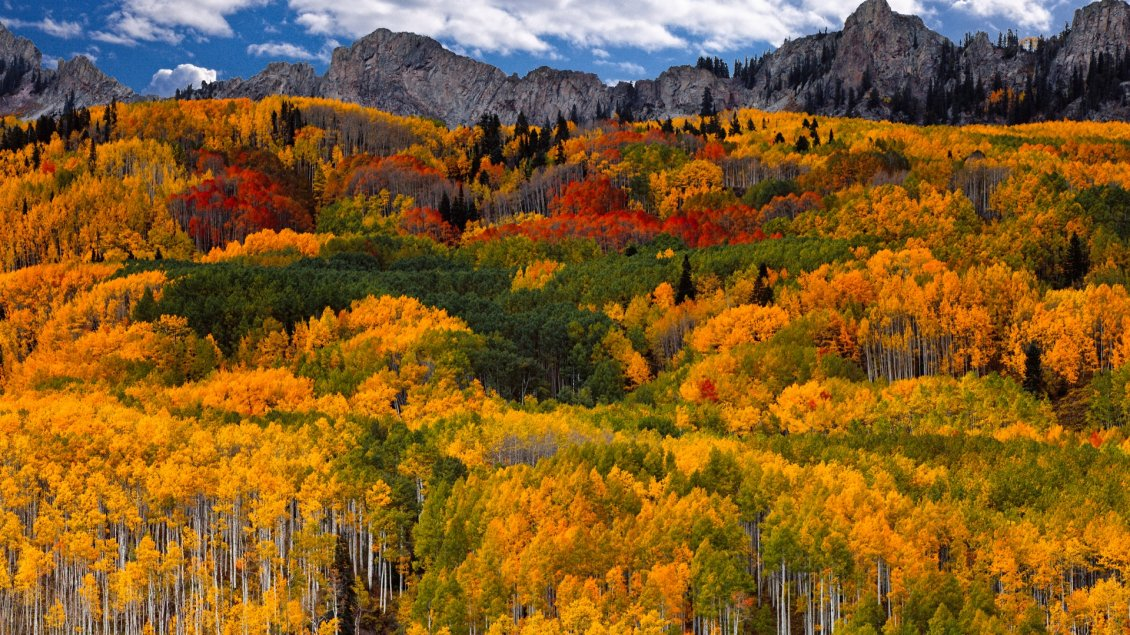 A Colorful Forest In Mountain Autumn Time