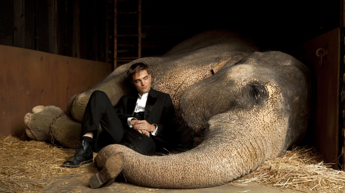 Download Wallpaper Robert Pattinson in black suit besides an elephant