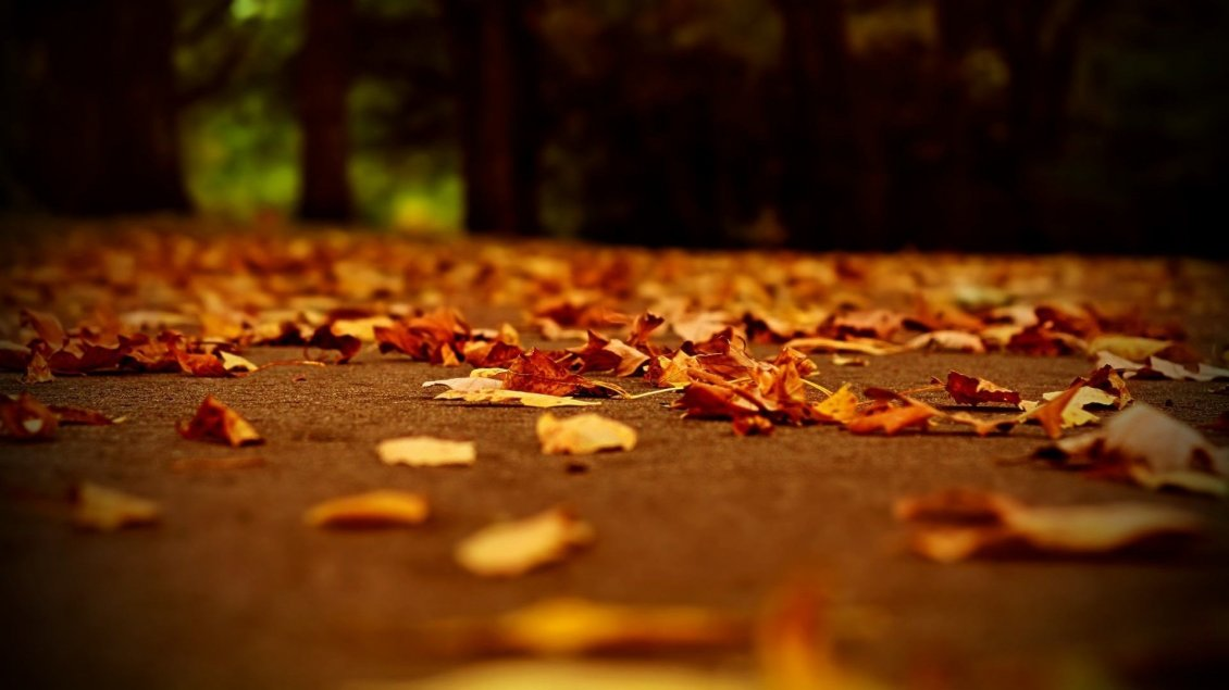 Download Wallpaper Millions of autumn leaves on the ground in the park