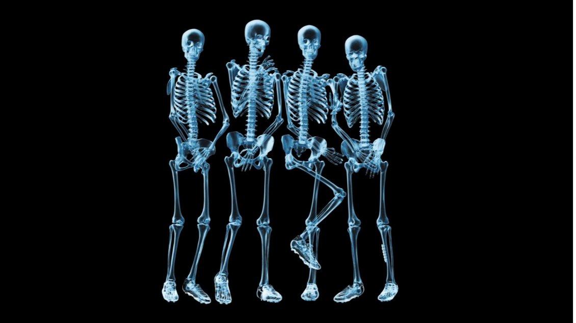 Funny Skeletons Naked Hd Wallpaper