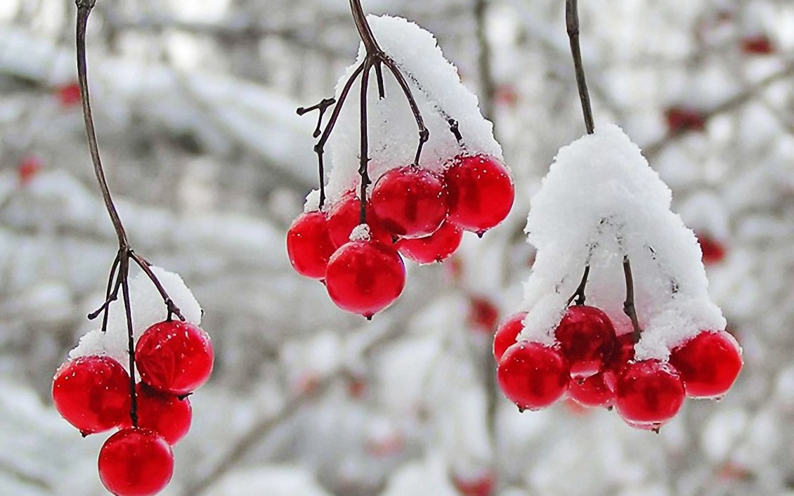 Download Wallpaper Frozen cranberries - cold winter time