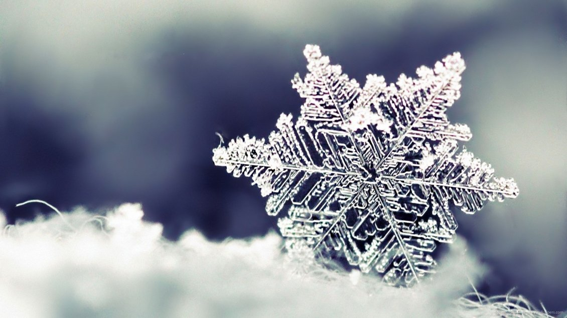 Download Wallpaper Beautiful crystal snowflake - macro HD wallpaper