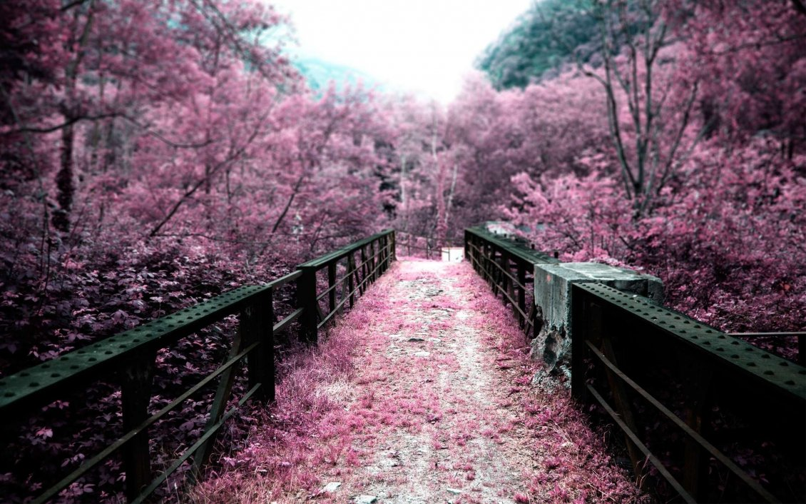 Download Wallpaper Pink path through the park - blossom trees