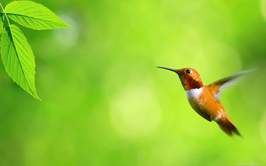 Little Bird Fly To The Green Leaves Hd Wallpaper