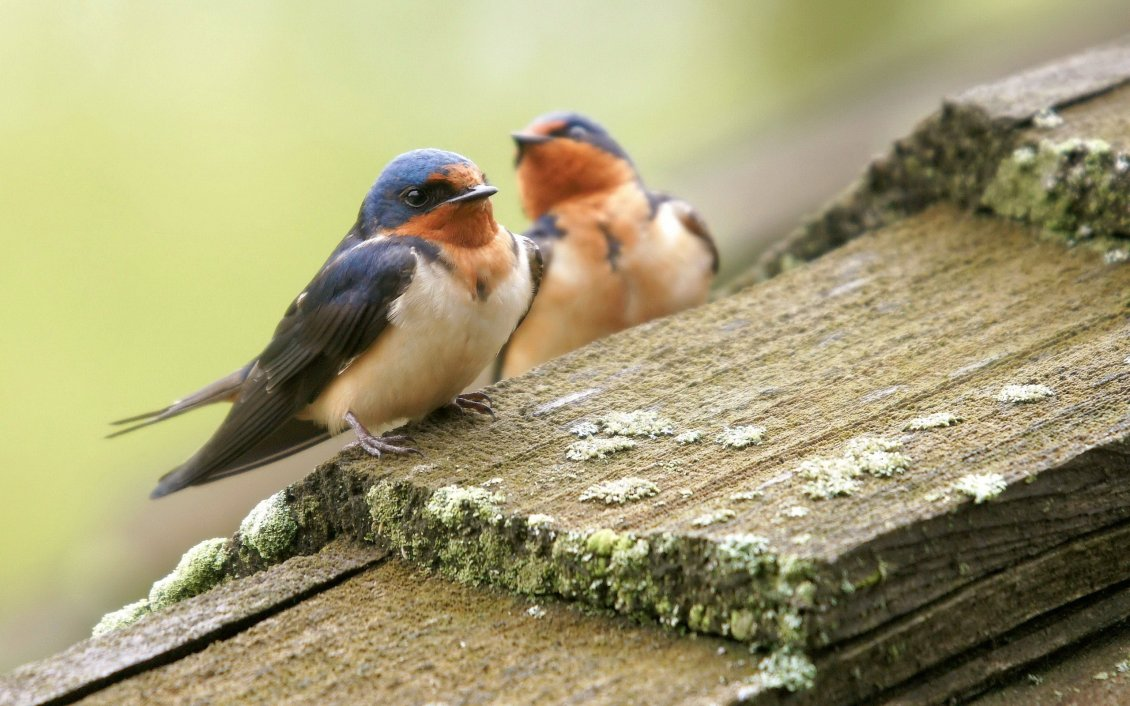 Download Wallpaper Two little birds on the wood - HD wallpaper