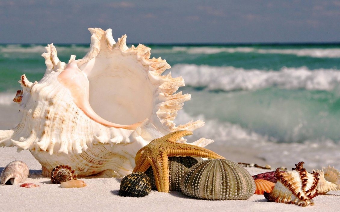 Starfishes And Shells On The Beach Hd Beautiful Wallpaper
