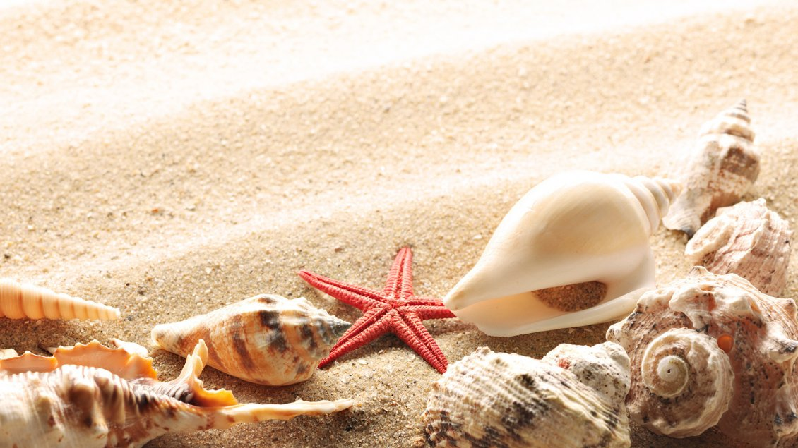 Shells On The Golden Sand From The Beach Hd Wallpaper